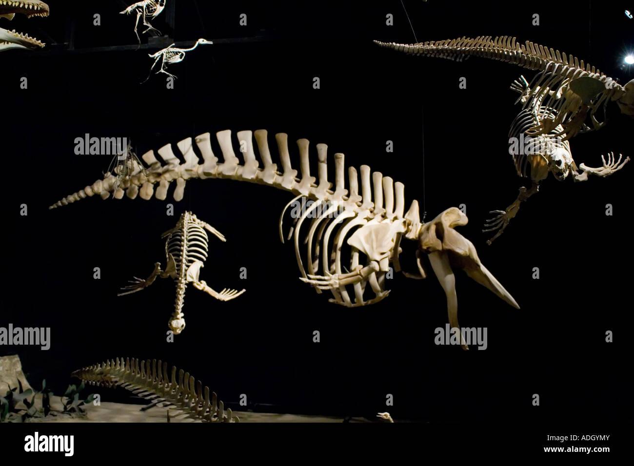 Egidio Feruglio paleontology museum - Stock Image