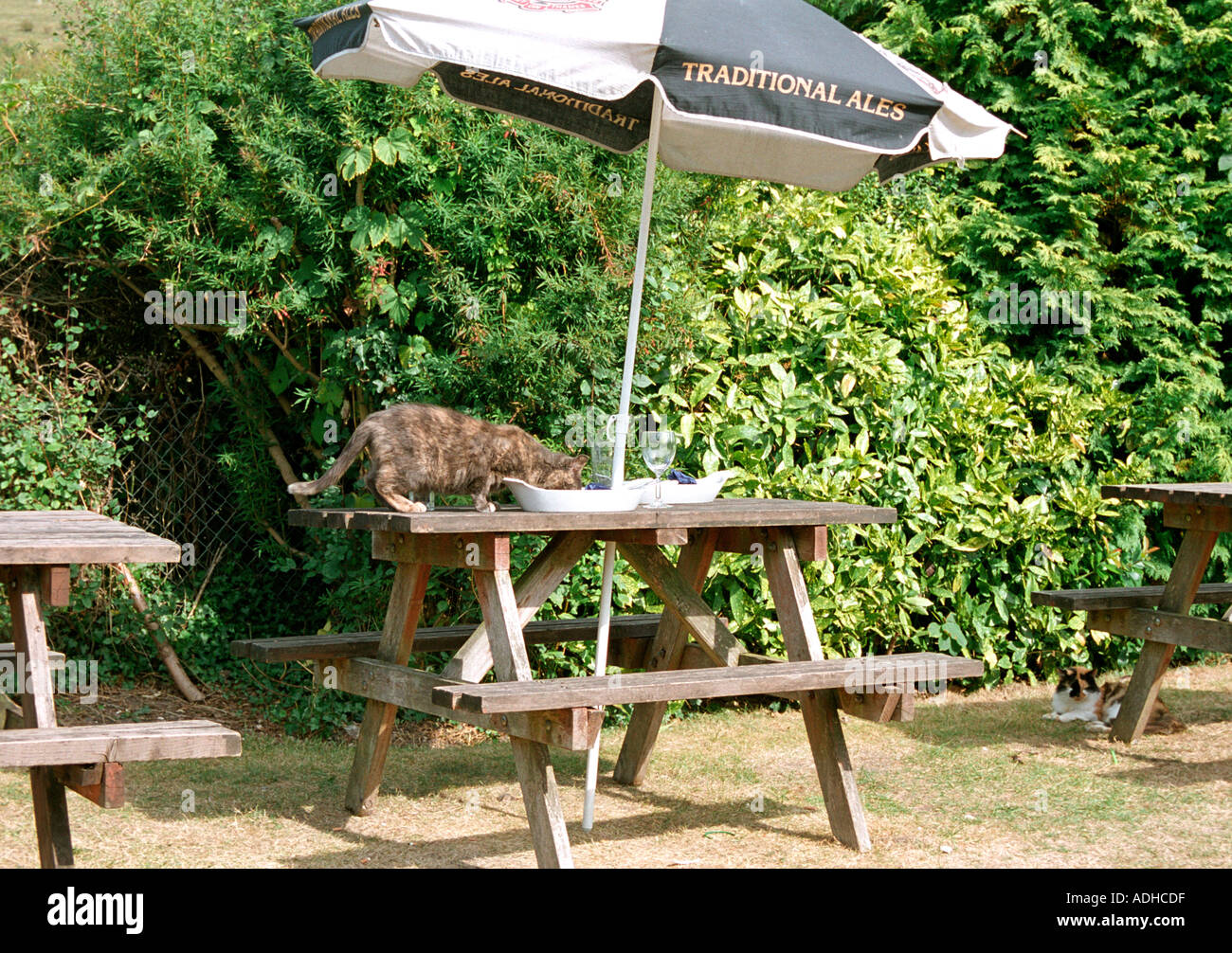 The cat is a novel way of clearing up at an English pub - Stock Image