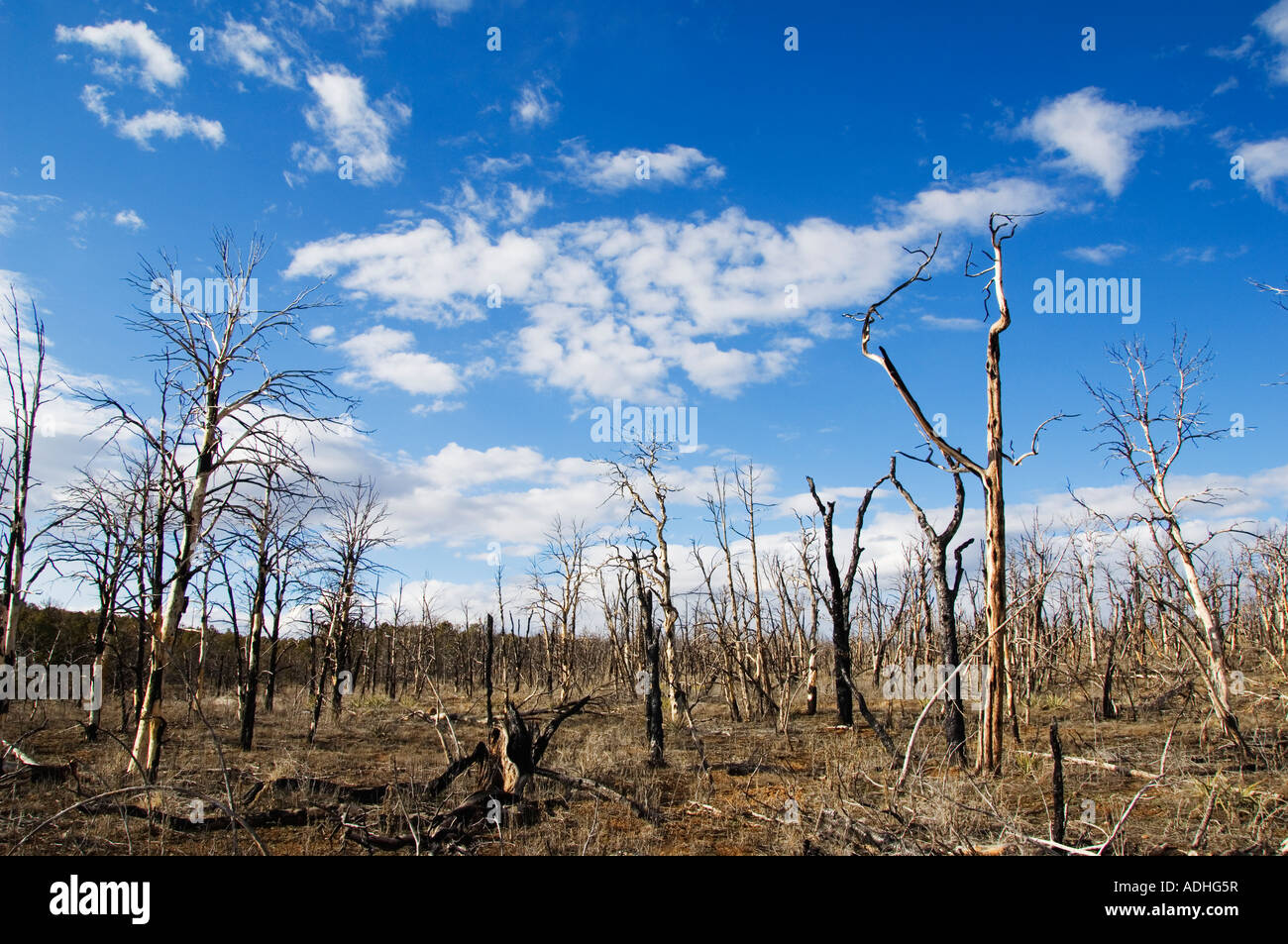 USA Colorado Mesa Verde National Park bush fire damage the