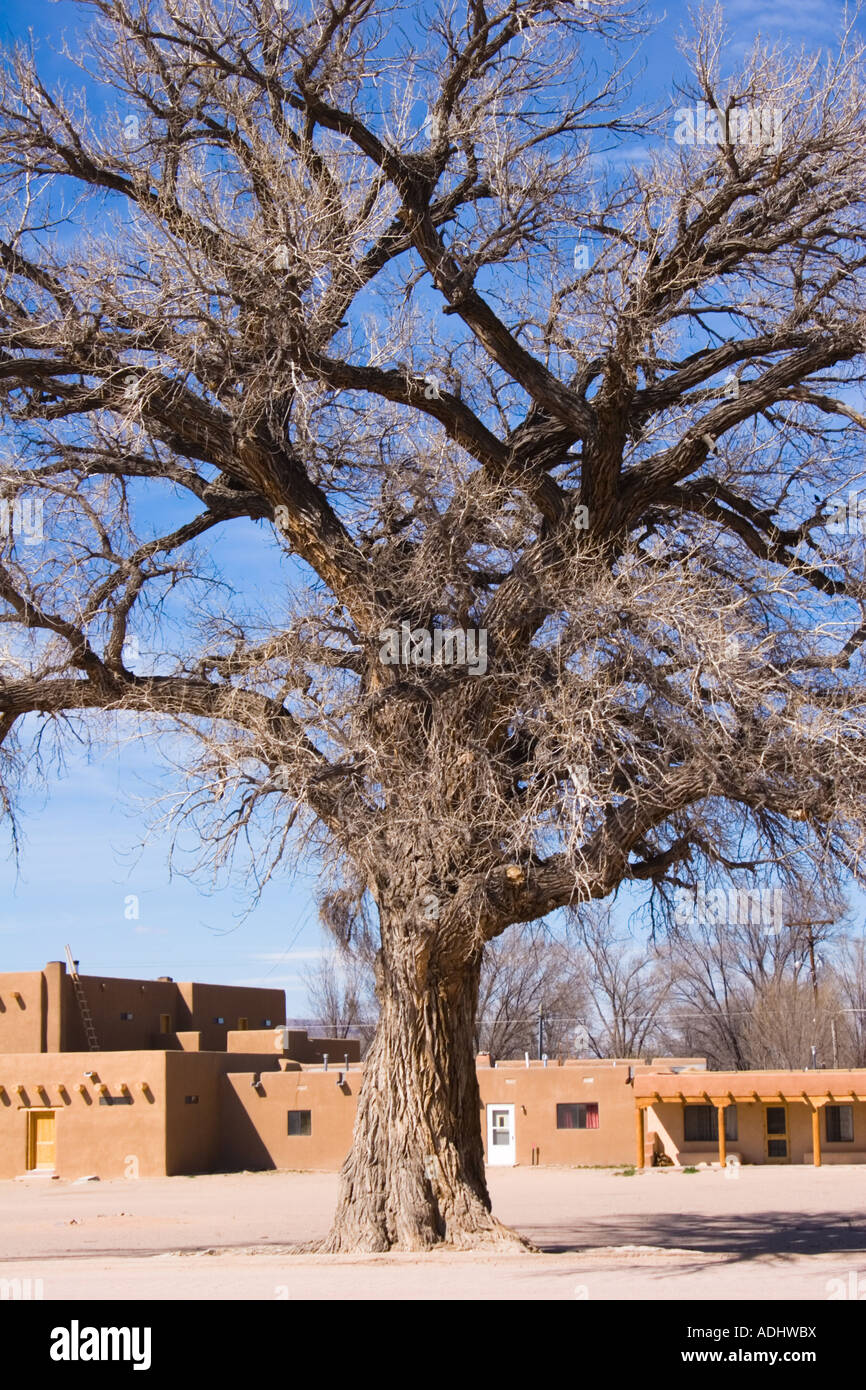 The holy tree in a native indian town San Il Defonso Pueblo Stock Photo