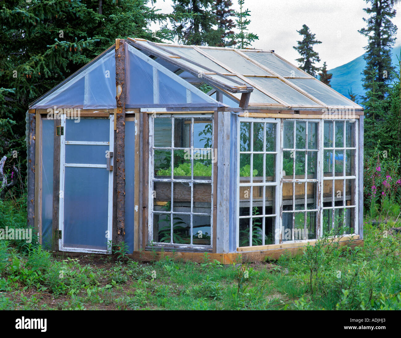 Greenhouse made with old windows Gracious House Lodge Alaska - Stock Image