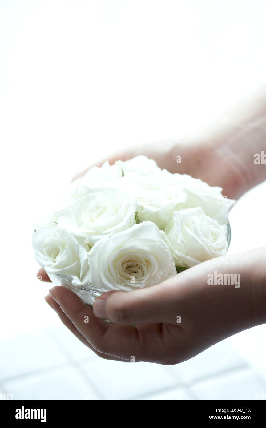 flower decoration hand holding roses - Stock Image