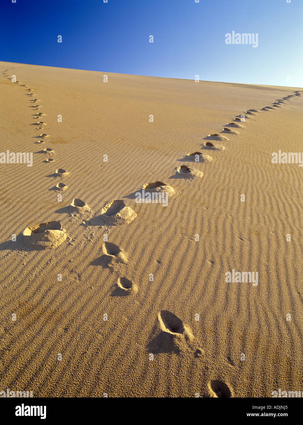 Footprints up sand dune Oregon Dunes National Recreational Area - Stock Image
