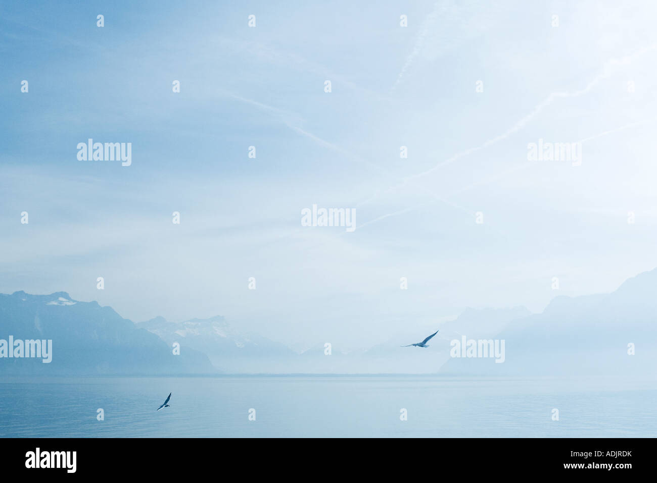 Birds flying over lake - Stock Image