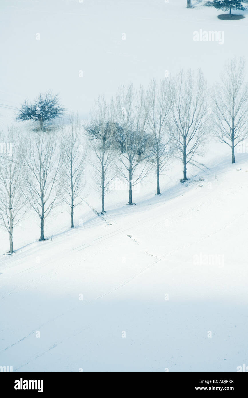Row of trees in snowy landscape, high angle view - Stock Image