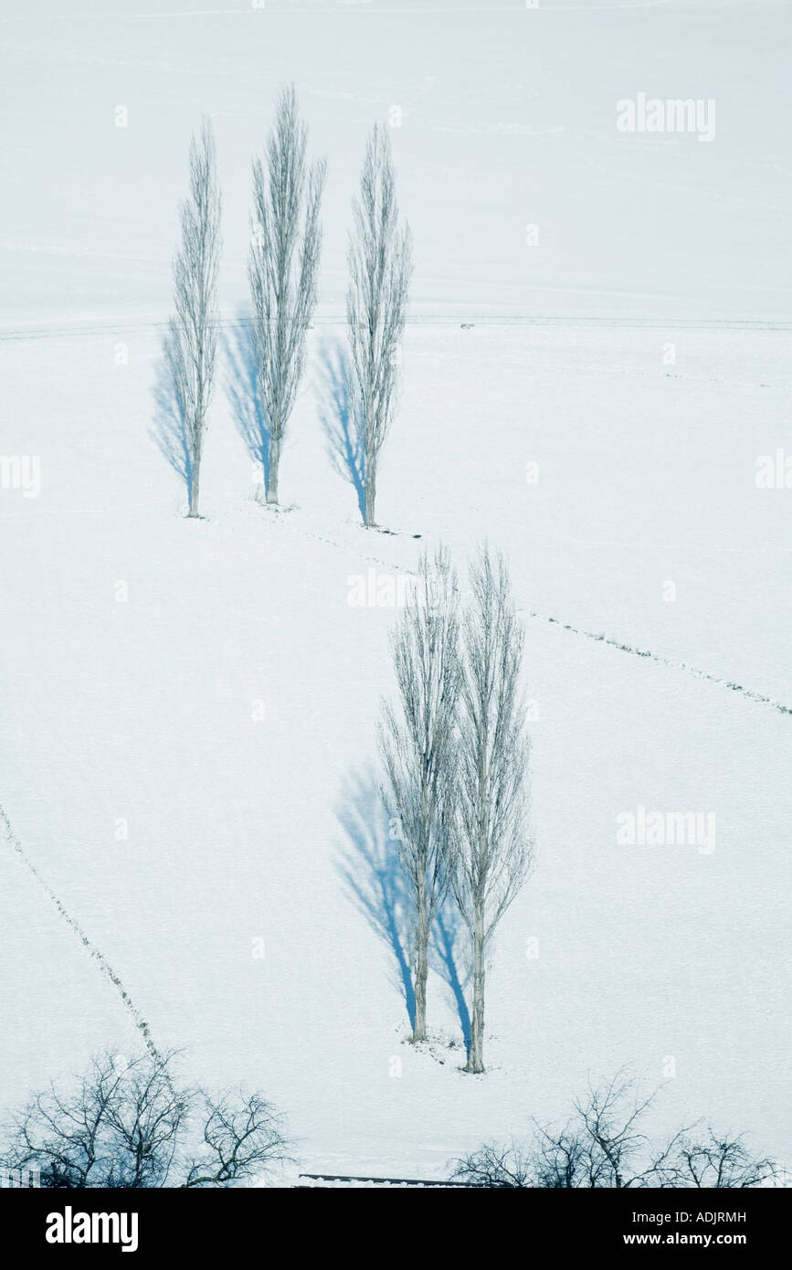 Trees in snowy landscape - Stock Image