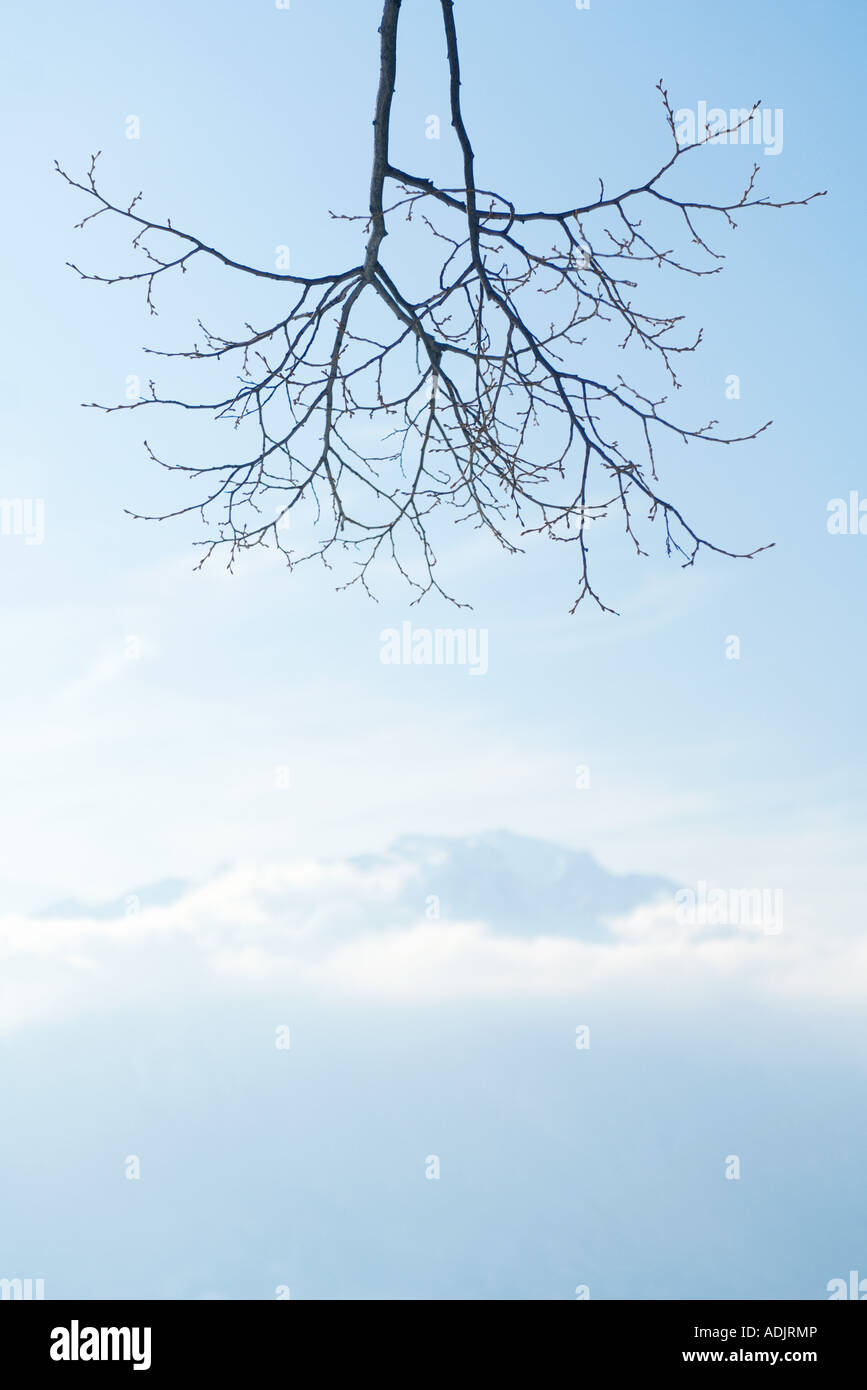 Bare branches, clouds and mountain in background - Stock Image
