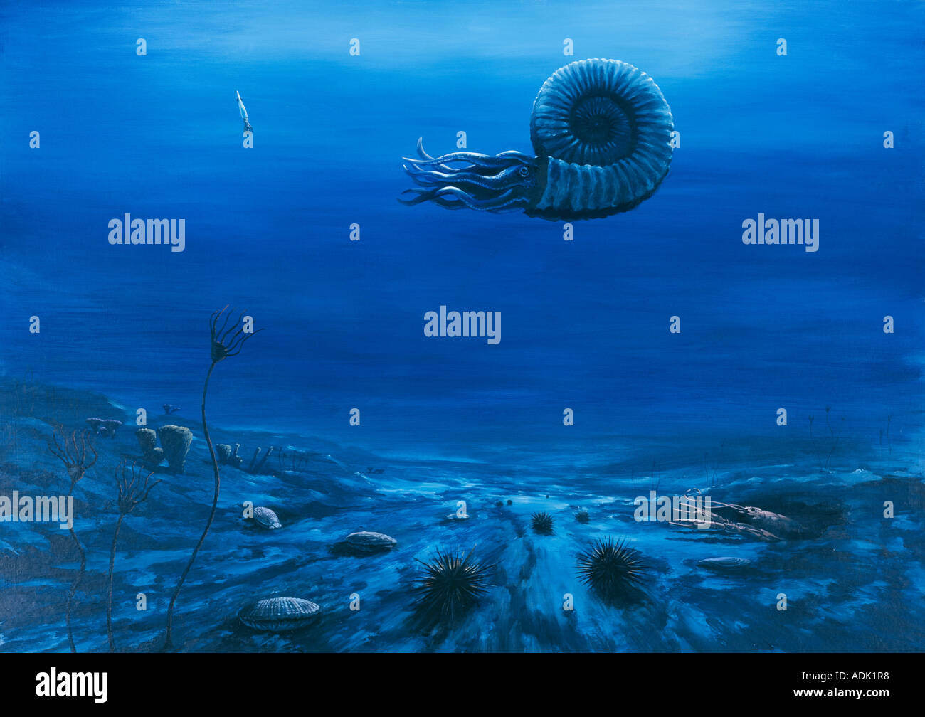 Cretaceous chalk seafloor - Stock Image