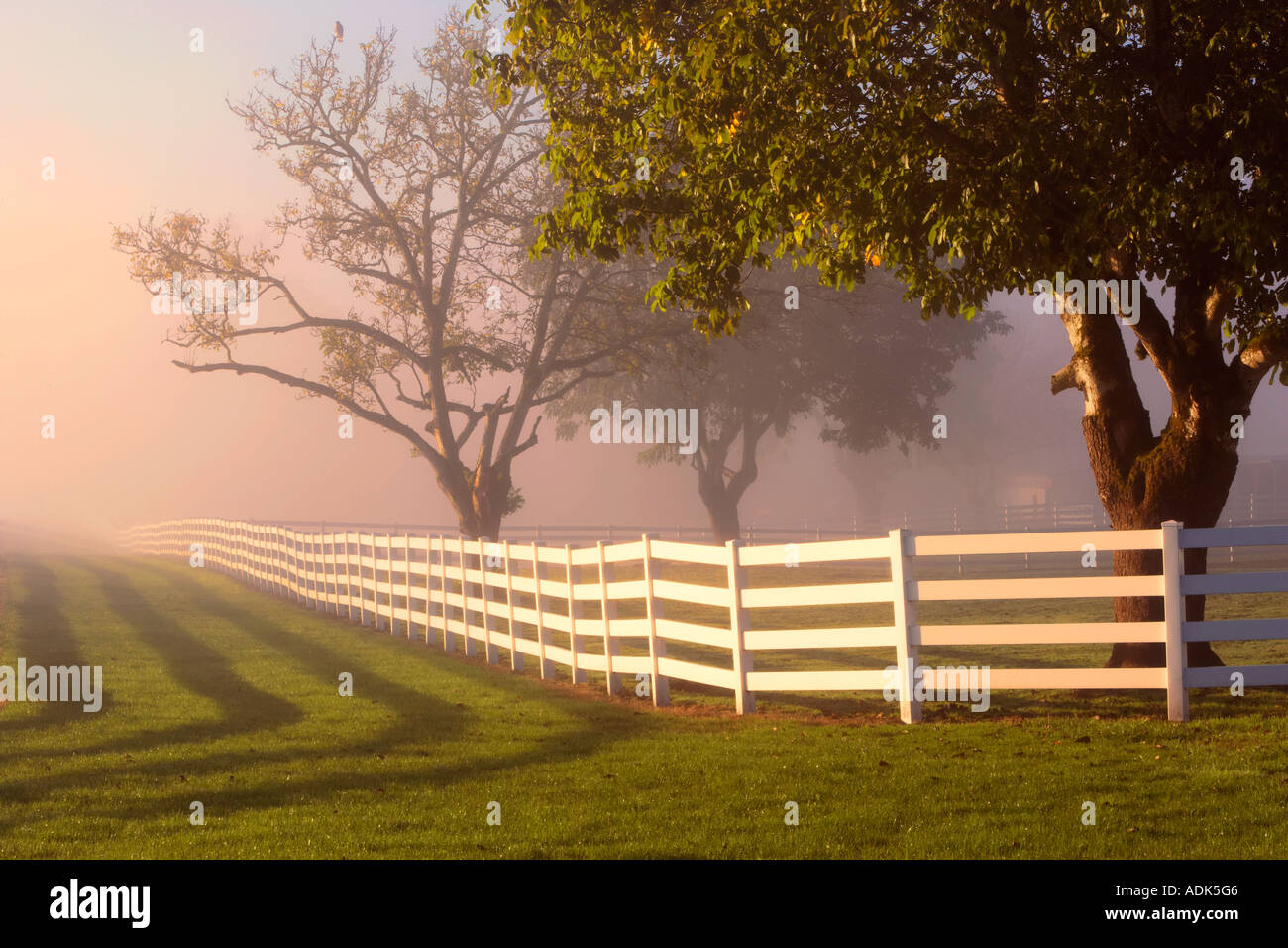 Fenced pasture with fog and sunrise and hawk in tree Near Wilsonville Oregon - Stock Image
