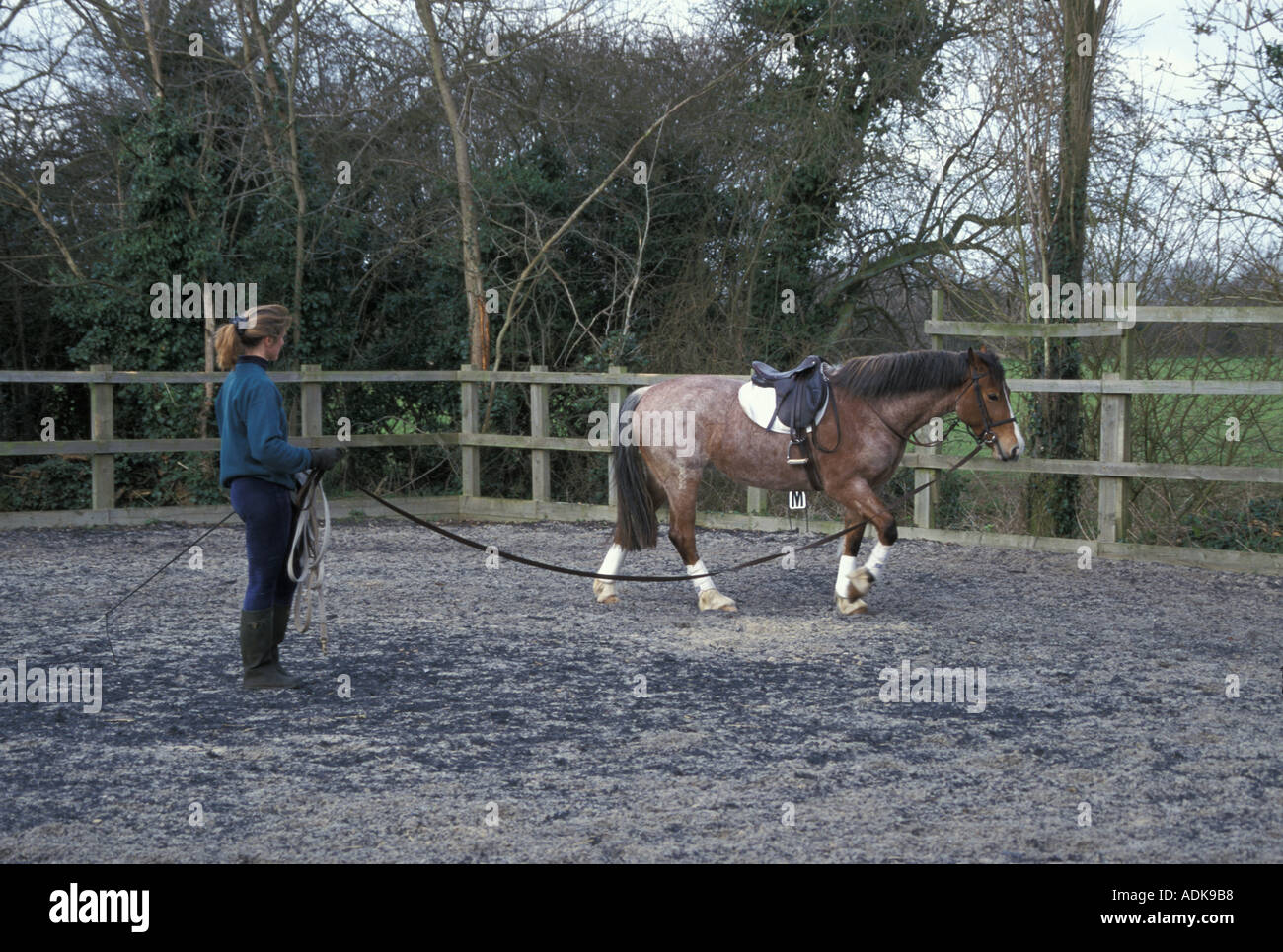 Sports Pastimes Horses Lunging a pony - Stock Image