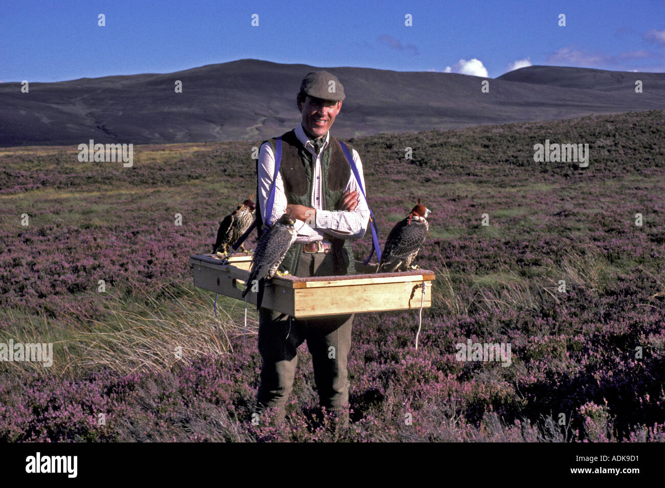 Sports and Pastimes Falconry Falconer with falcons on a cadge - Stock Image