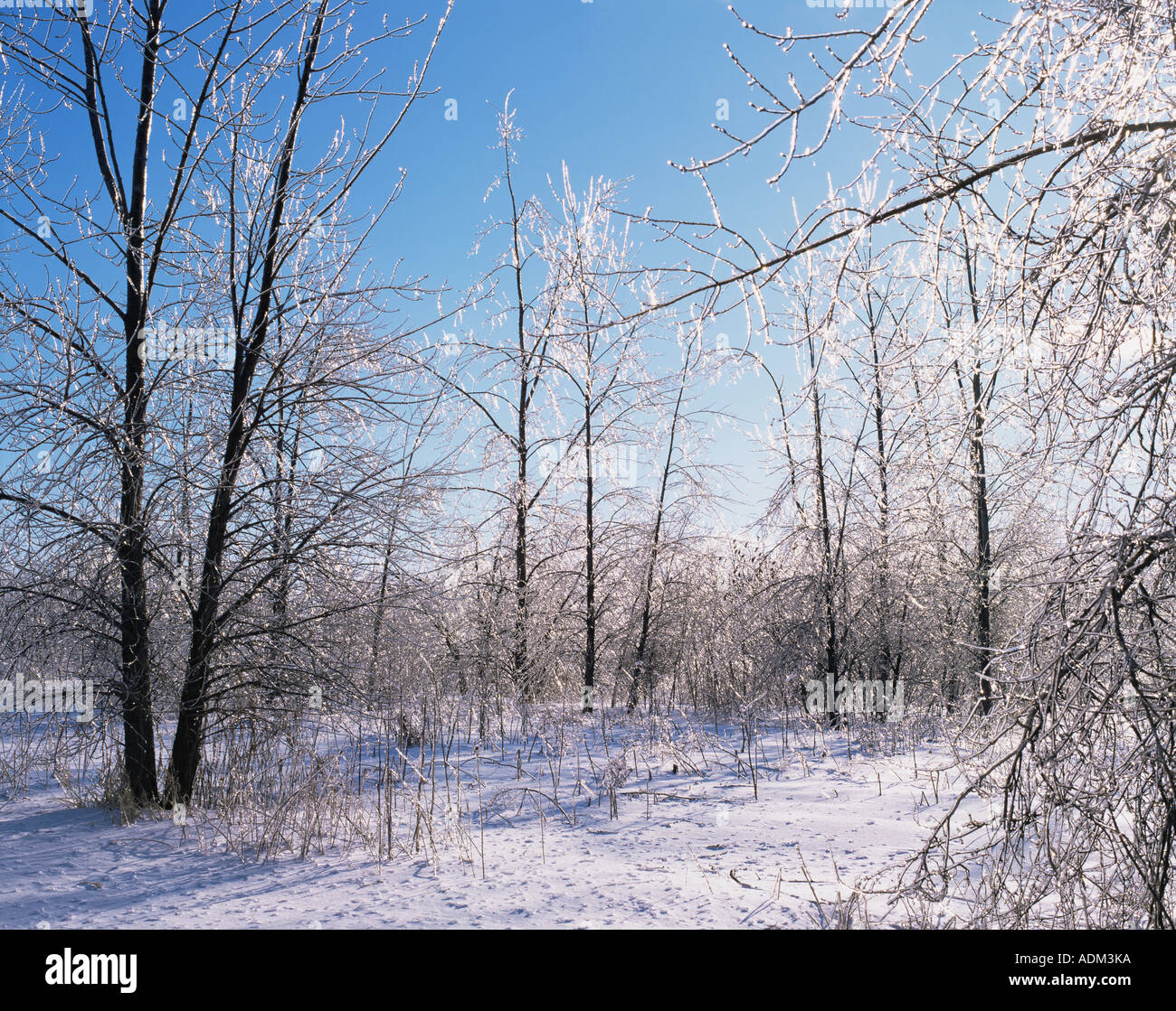 Forest in the winter - Stock Image