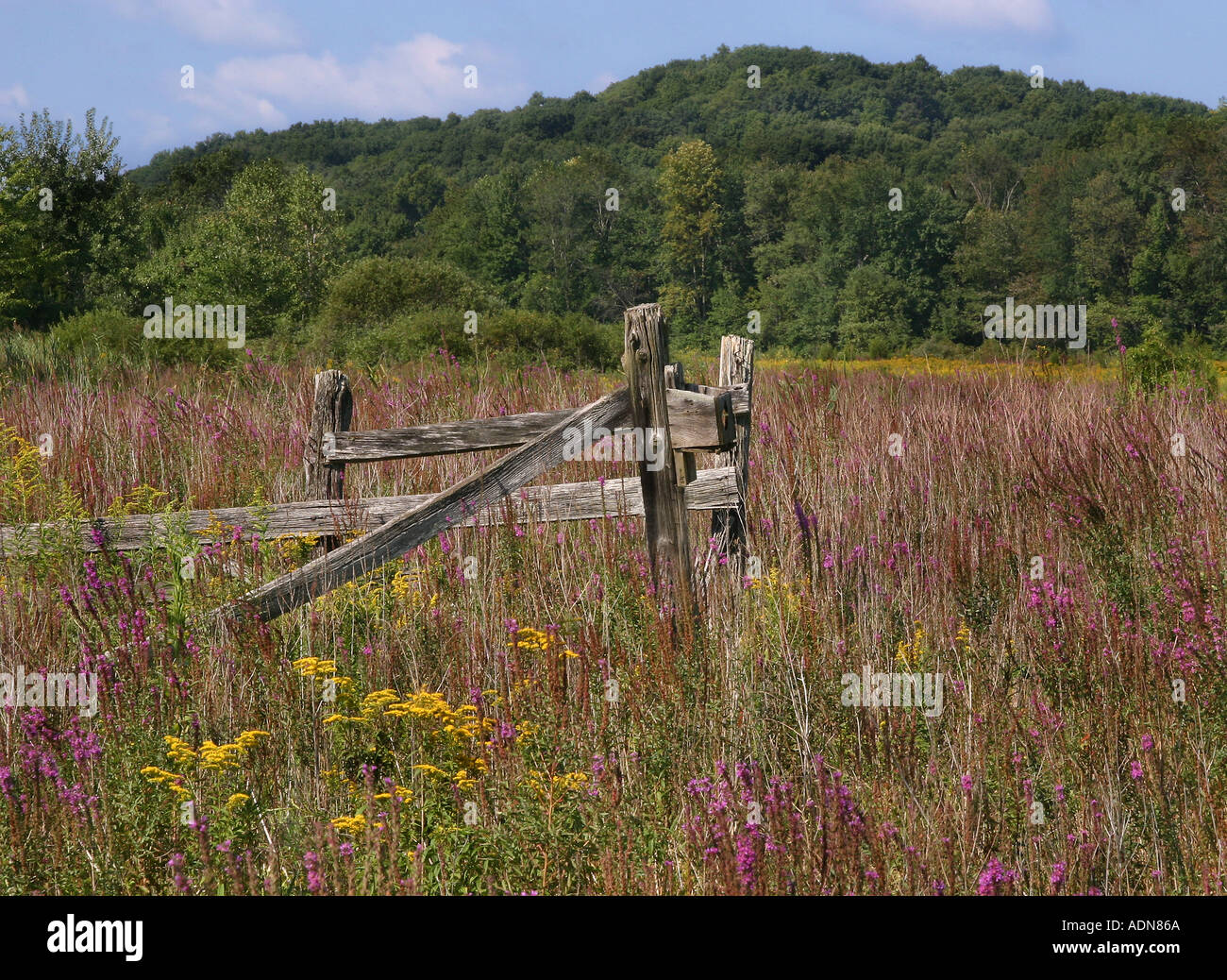Remnents of farming and livestock in the skylands of New Jersey A beautiful field of wildflowers Stock Photo