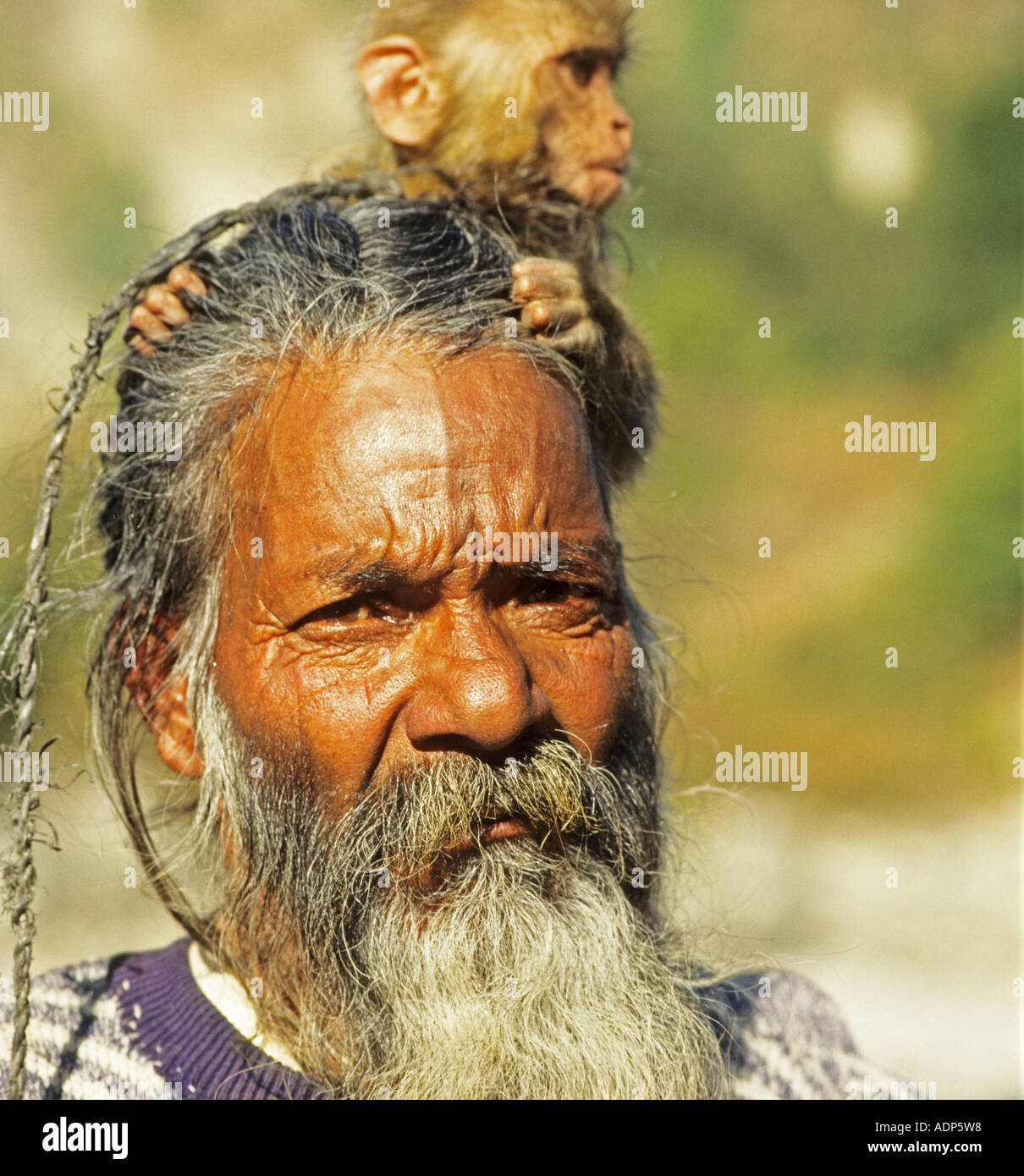 sadus with monkey the sacred mens india - Stock Image