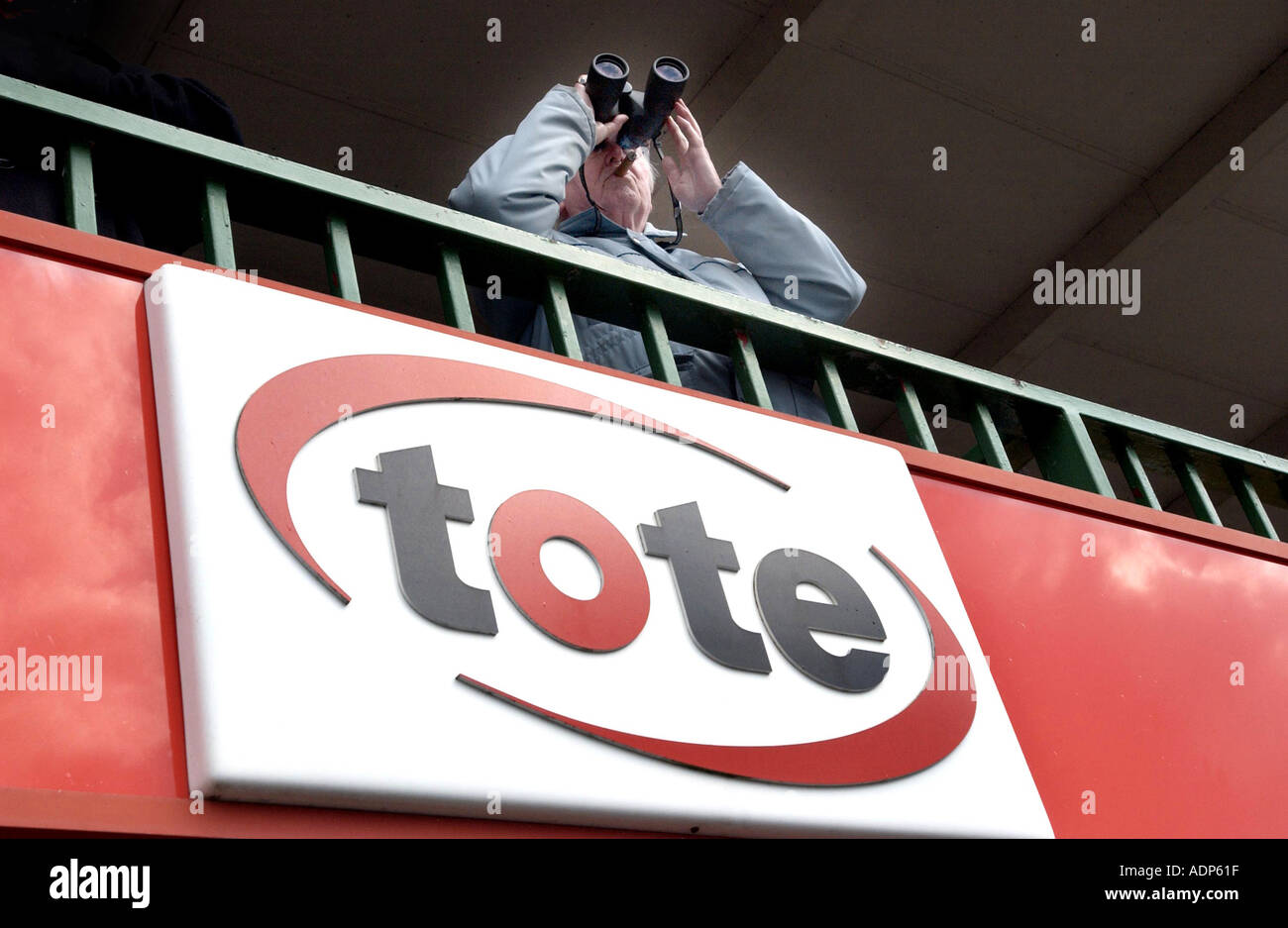 A racegoer studies form with binoculars over a Tote logo on a balcony at Lingfield Park racecourse,  Surrey. - Stock Image