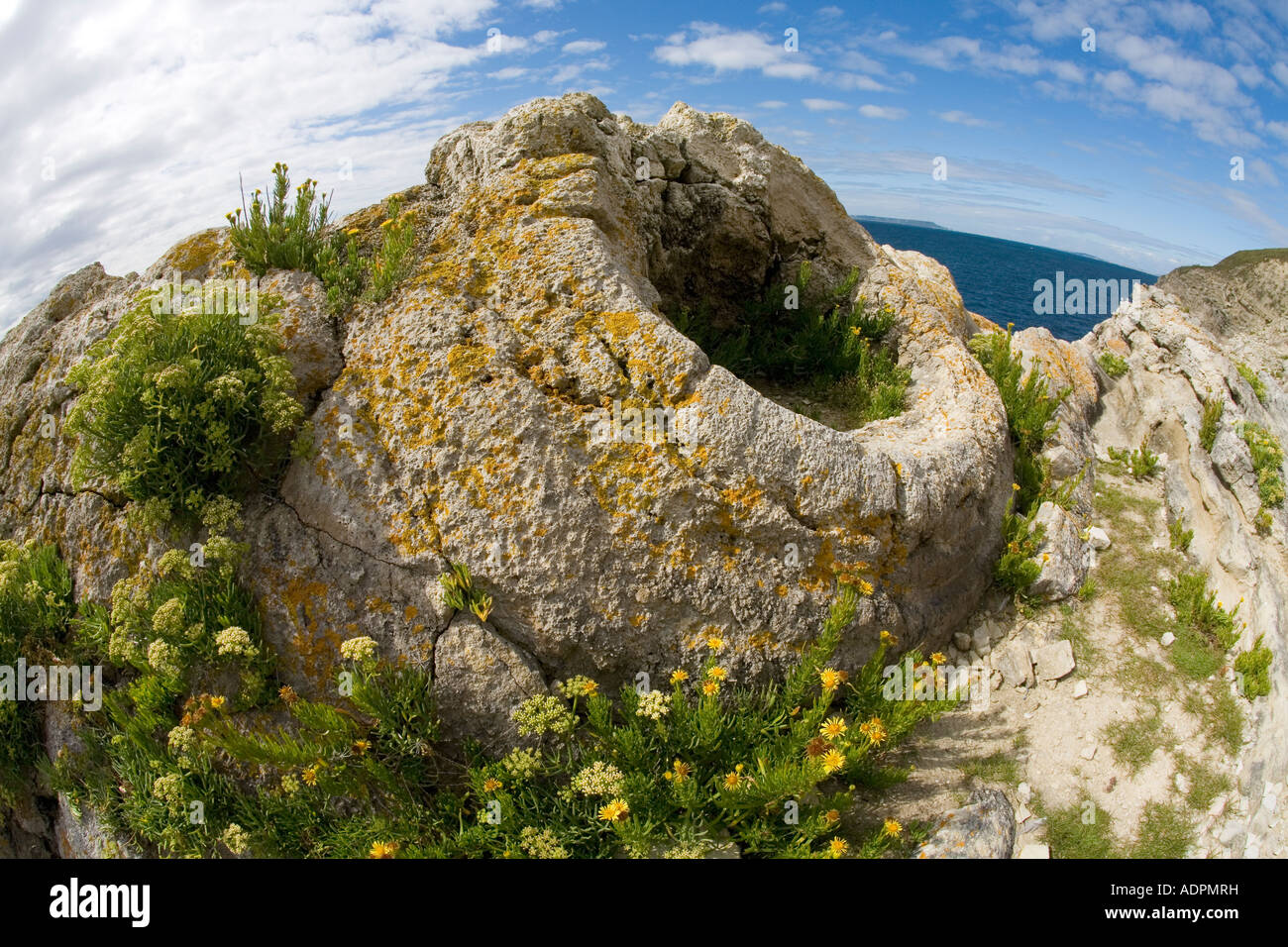Fossilised fossilized fossil forest near Lulworth Cove Jurassic Coast World Heritage Site on sunny summers day Dorset - Stock Image