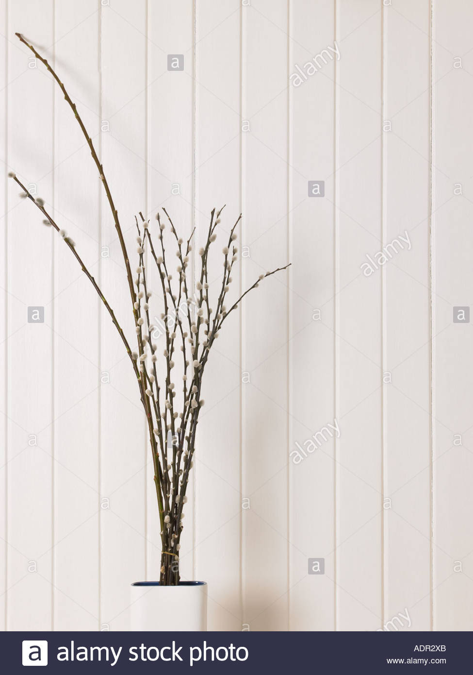 Decorative twigs in a vase - Stock Image