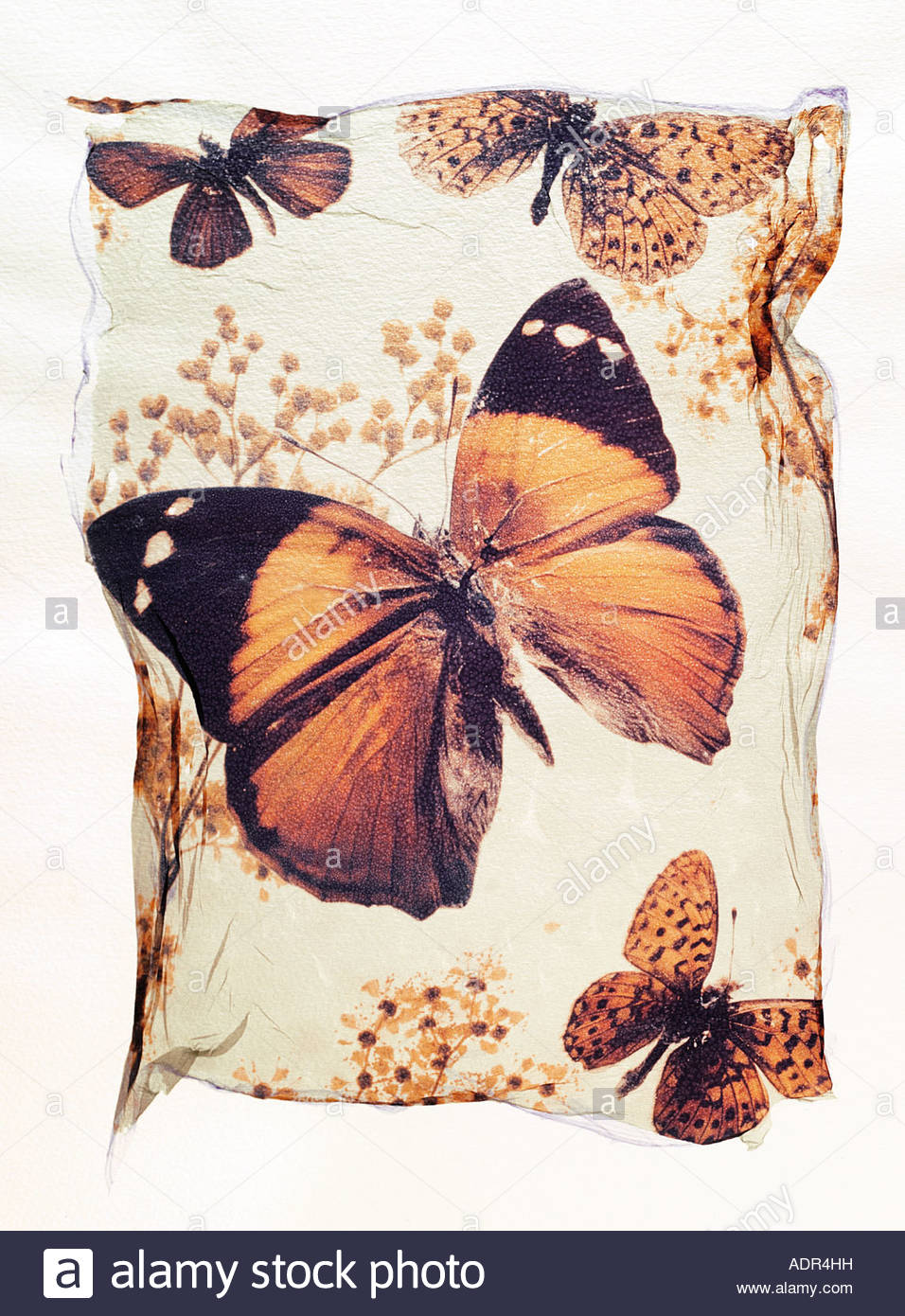 Polaroid lift of an brown butterfly on a flower, opened winged. A concept art photo - Stock Image