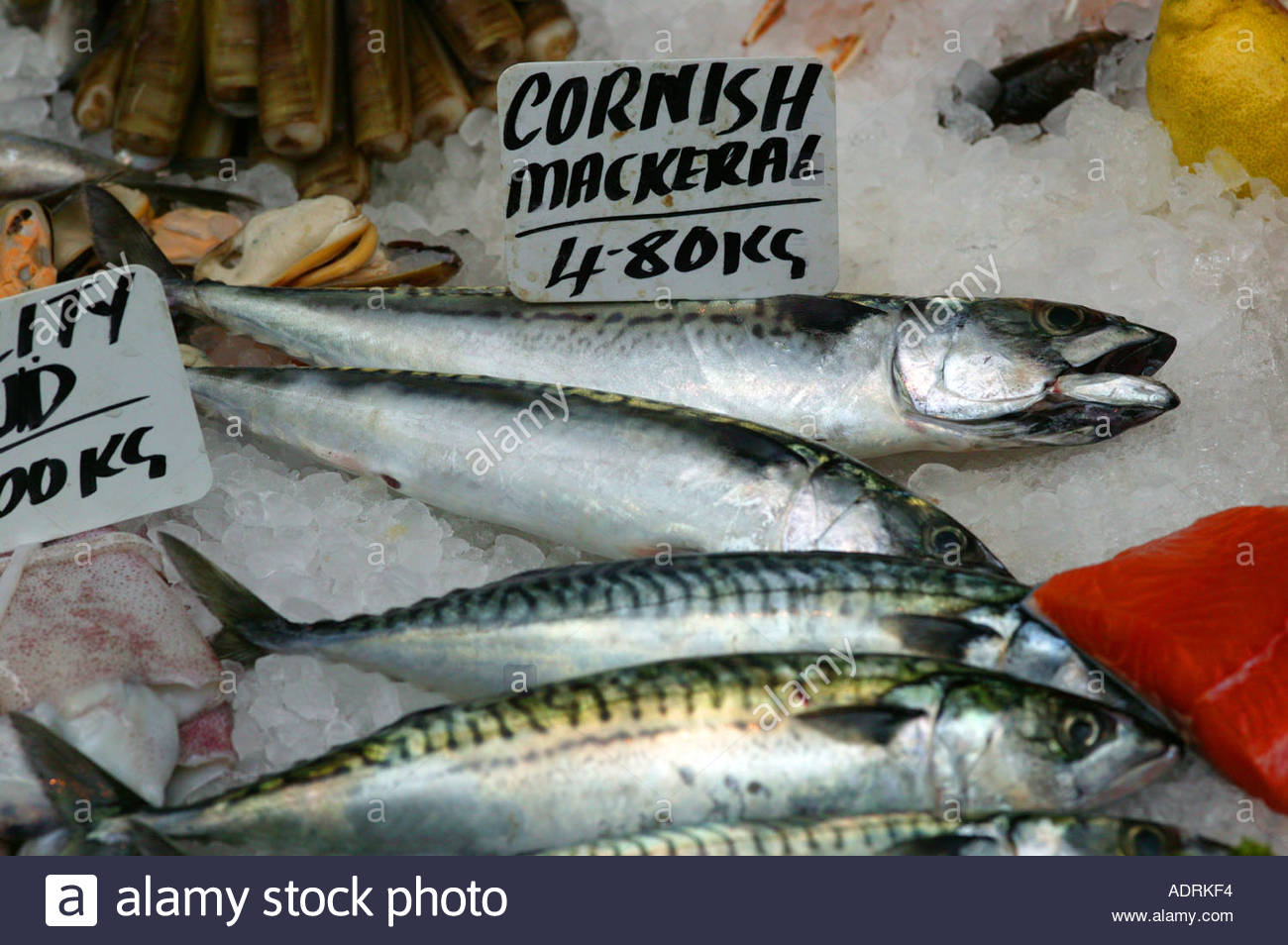 Cornish mackerel fishmonger Borough market London England - Stock Image