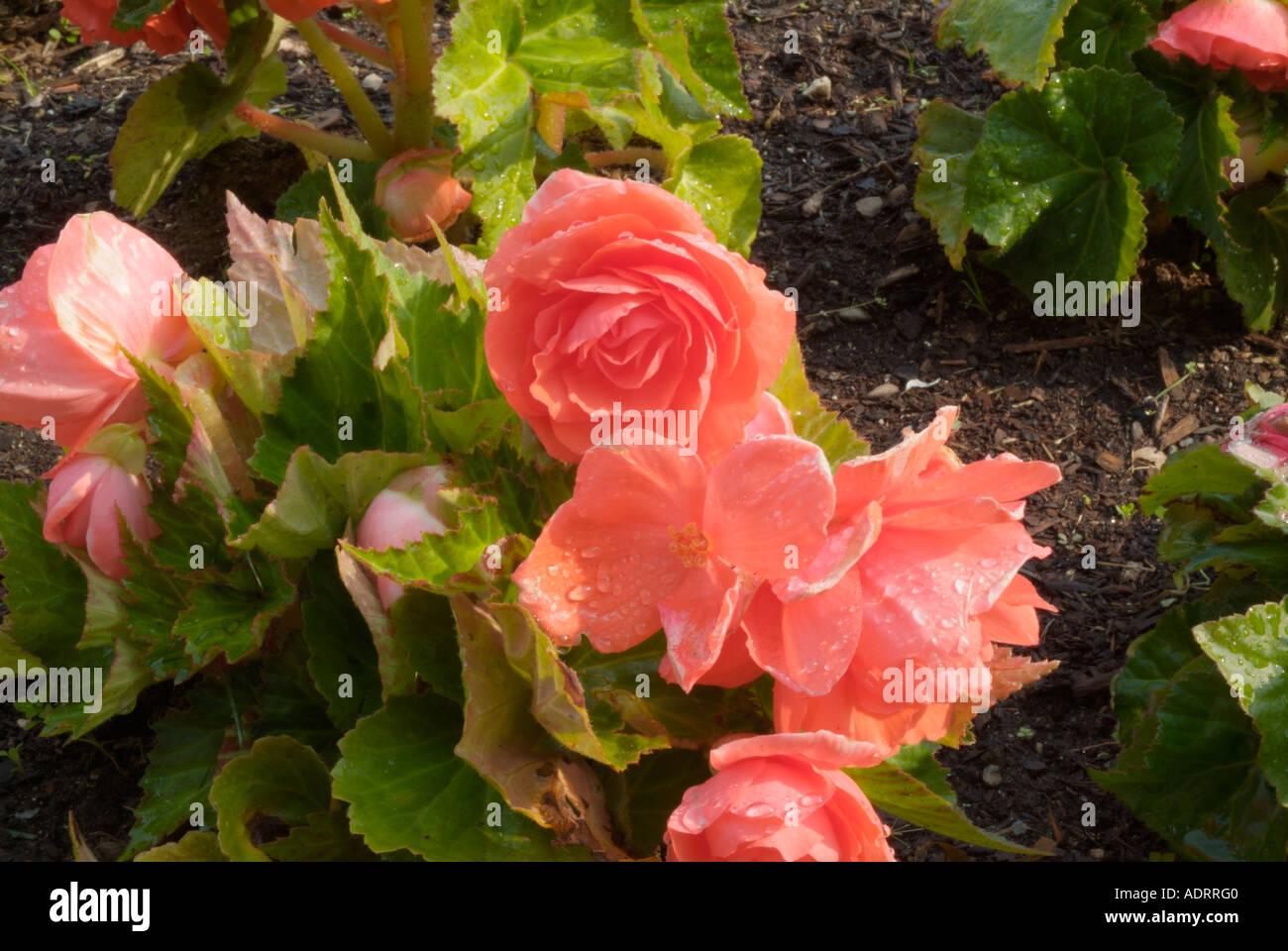 Flowers bloom pretty pedals gardens garden grow summer stock flowers bloom pretty pedals gardens garden grow summer spring colors plant plantsenvironment elegant natural mightylinksfo