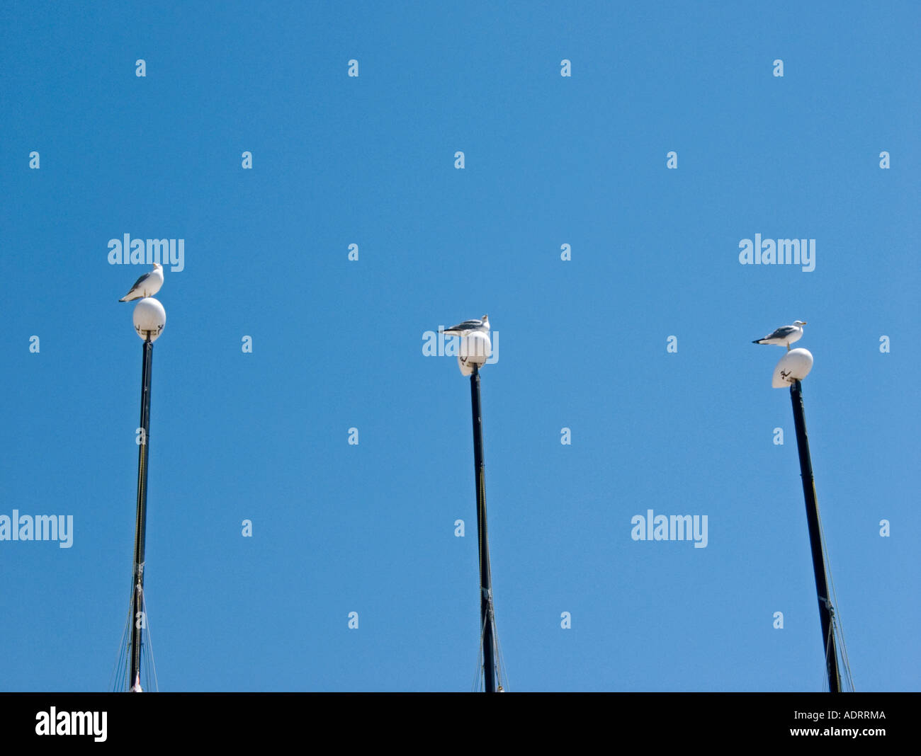 a line of three masts with seagulls perched on top - Stock Image