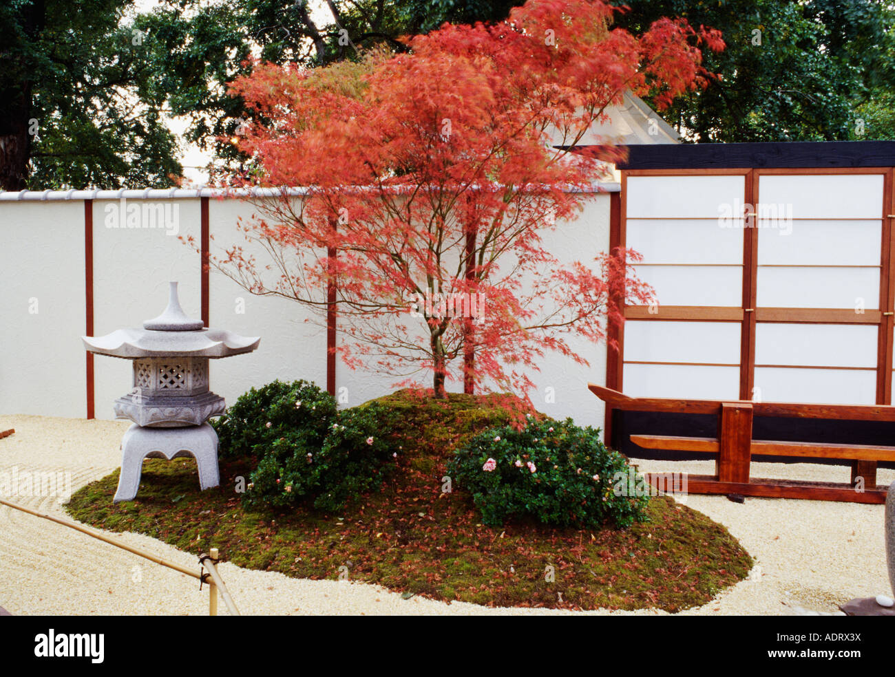 Beau Red Acer Palmatum And Japanese Stone Lantern In Oriental Gravel Garden With  White Fence
