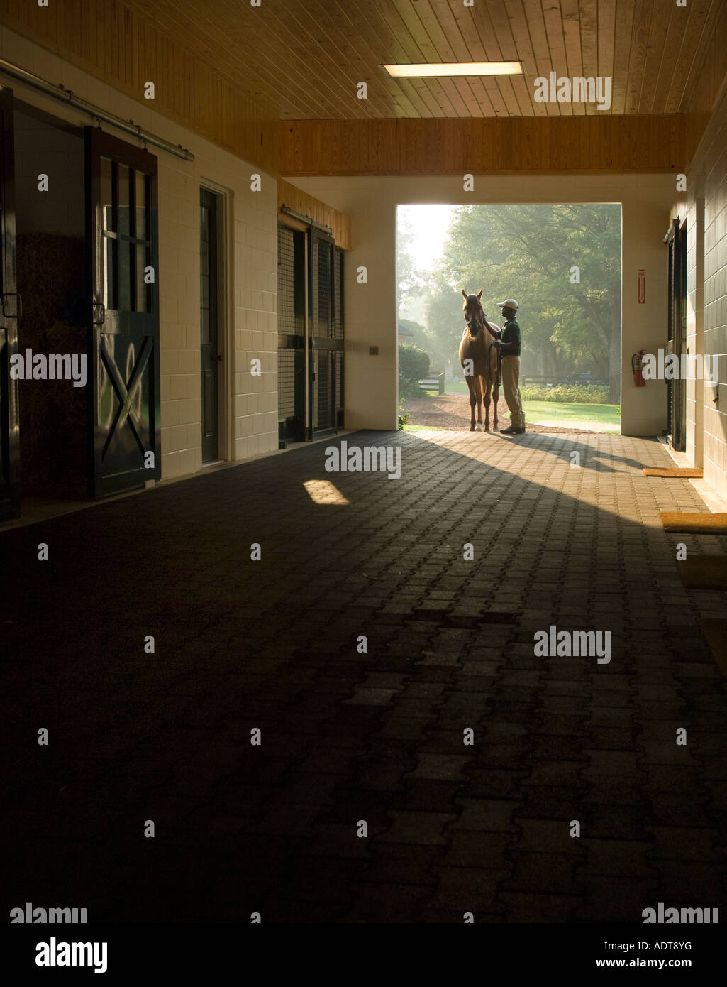 A young black man groom stands holding and rubbing a Thoroughbred horse stallion in stud barn aisleway - Stock Image