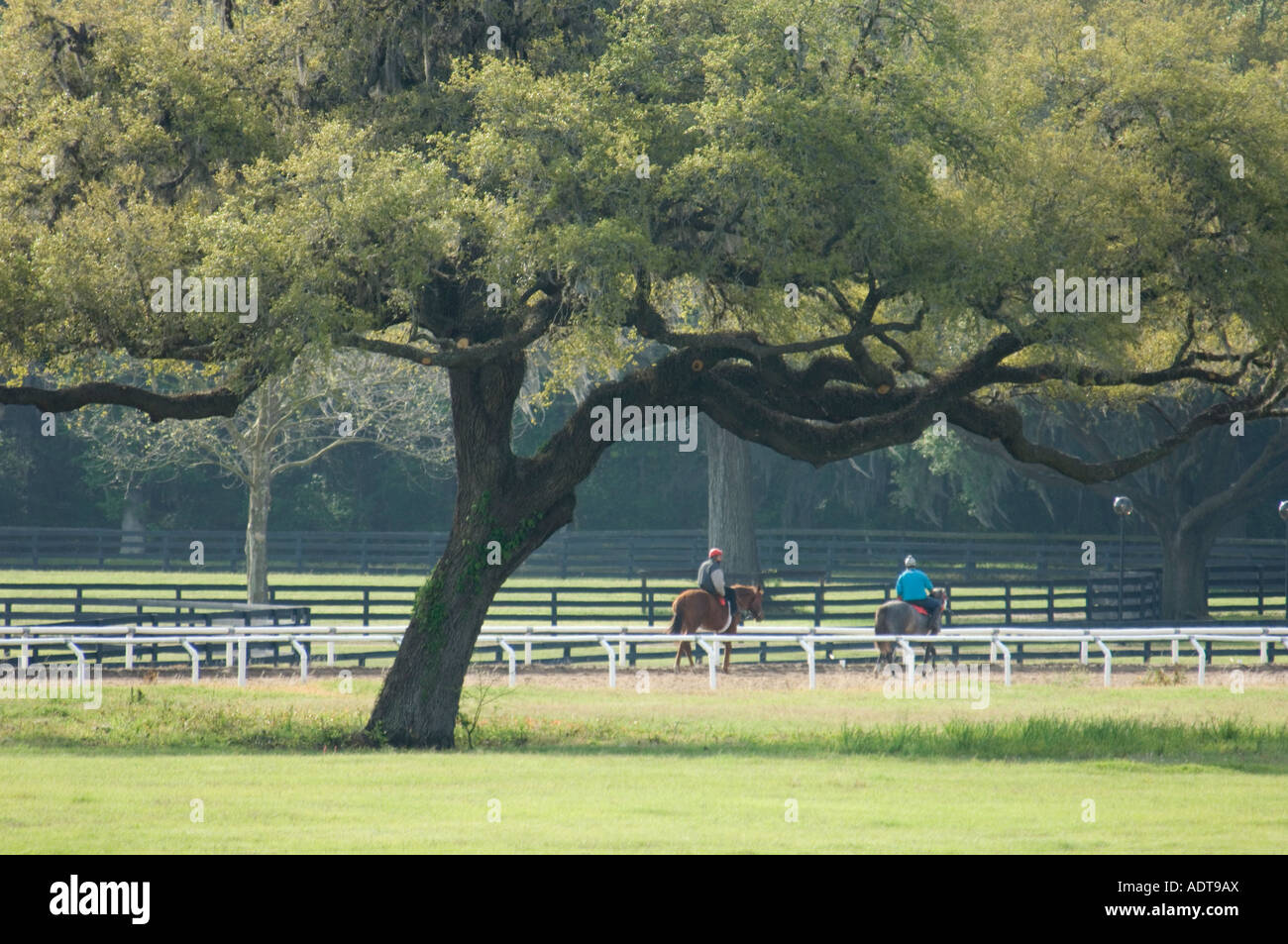 Exercise riders on Thorougbred two year olds in race training - Stock Image