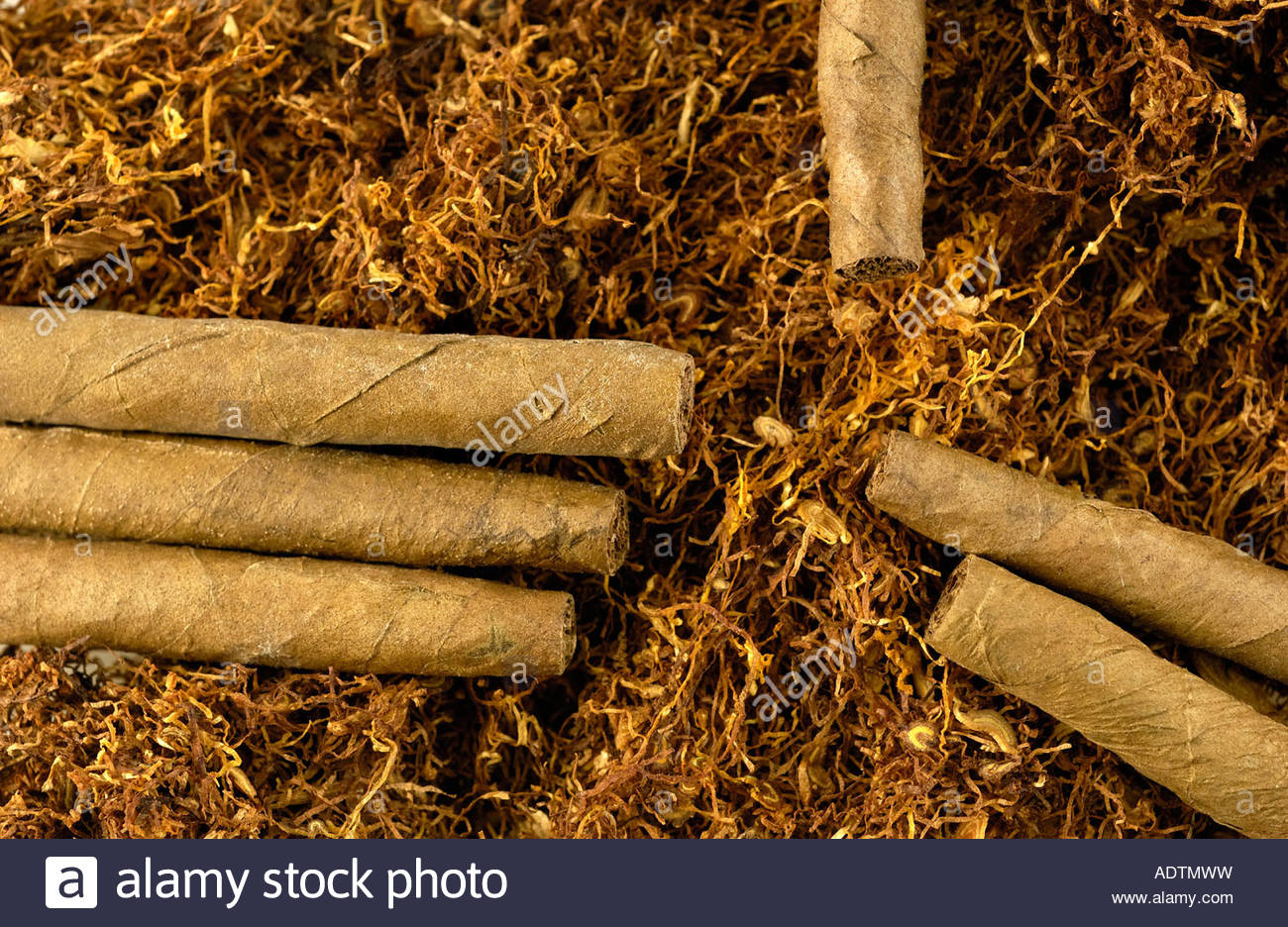Tobacco; cigarillos and tobacco leaves, France - Stock Image