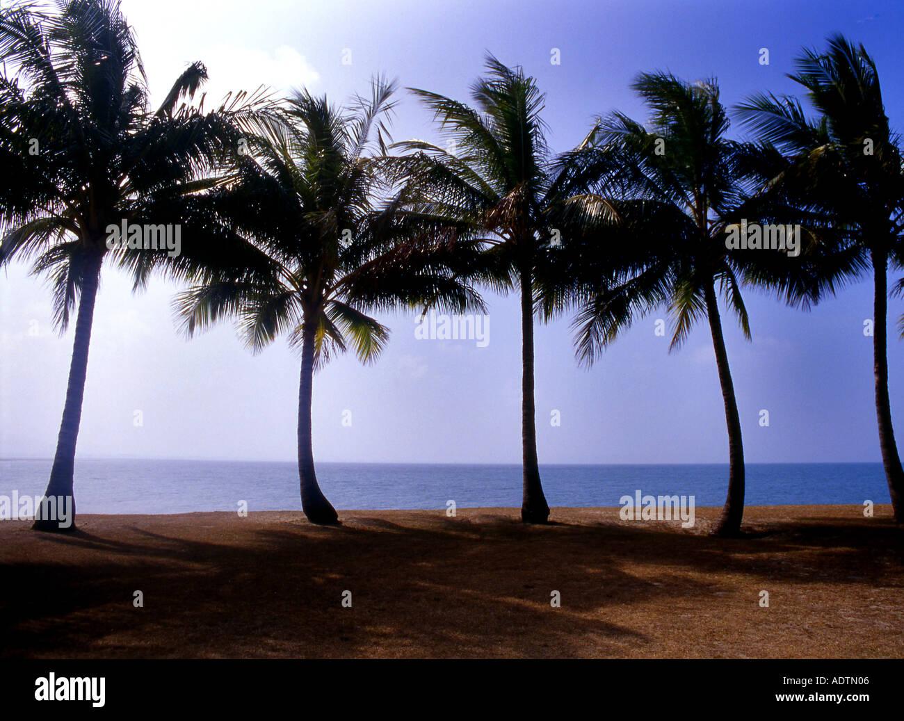 Palmtrees at Port Douglas Queensland - Stock Image