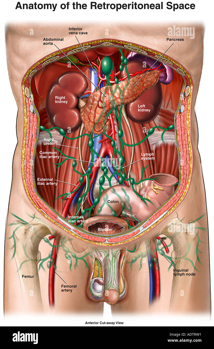 Anatomy of the Retroperitoneal Space Stock Photo: 7710160 - Alamy