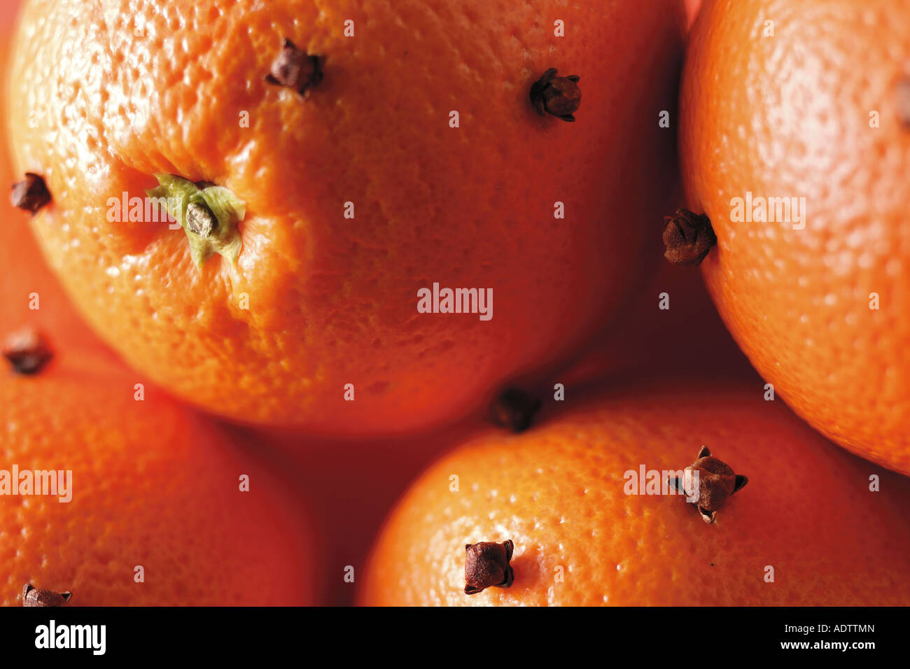 Whole oranges studded with cloves, close up filling frame - Stock Image