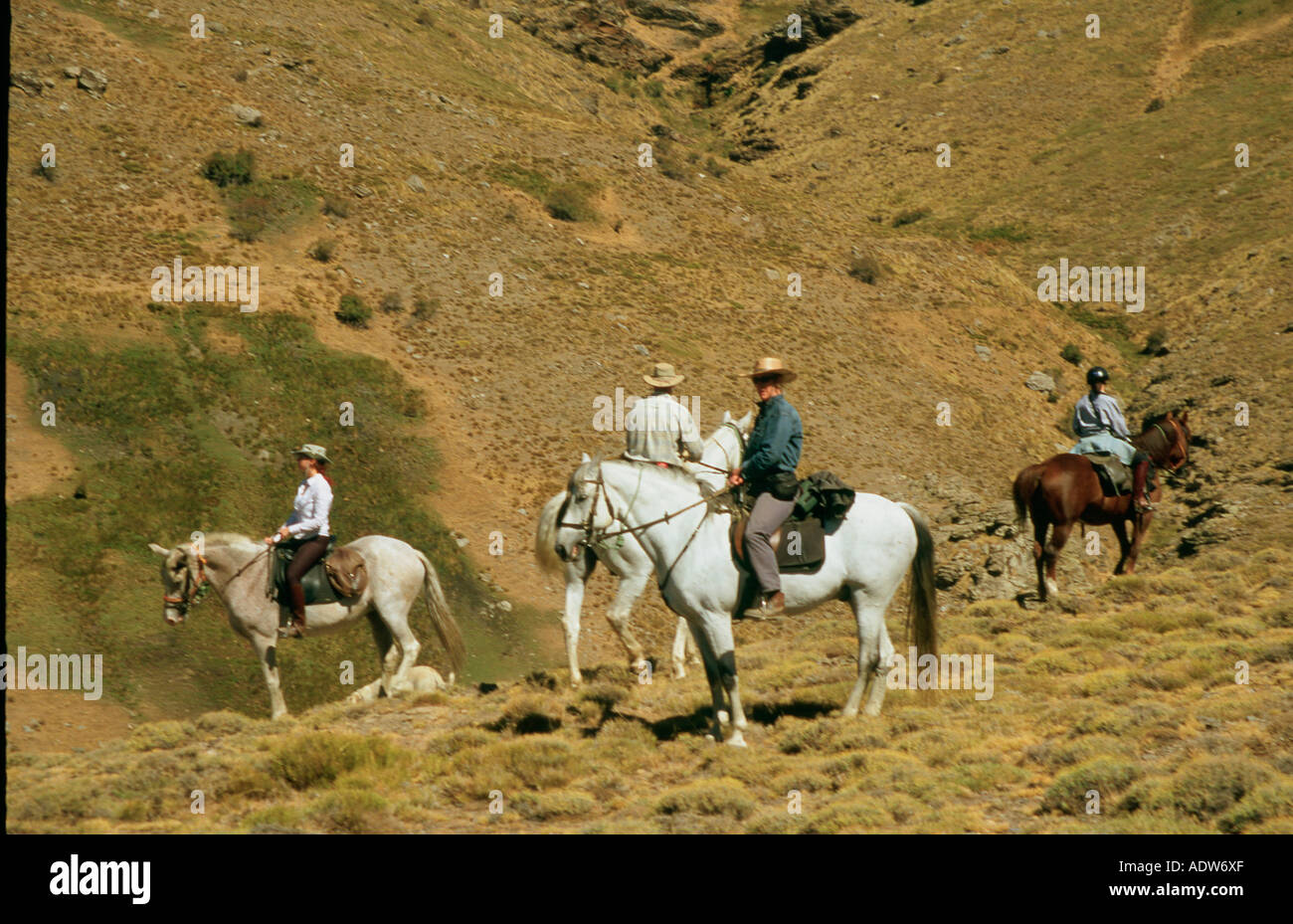 Riders on  Andalusian and Andalusian / Arab crosses in the Alpujarra mountains of the Sierra Nevada in Spain - Stock Image
