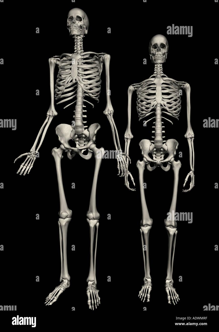 Body Atlas Stock Photo 7714942 Alamy