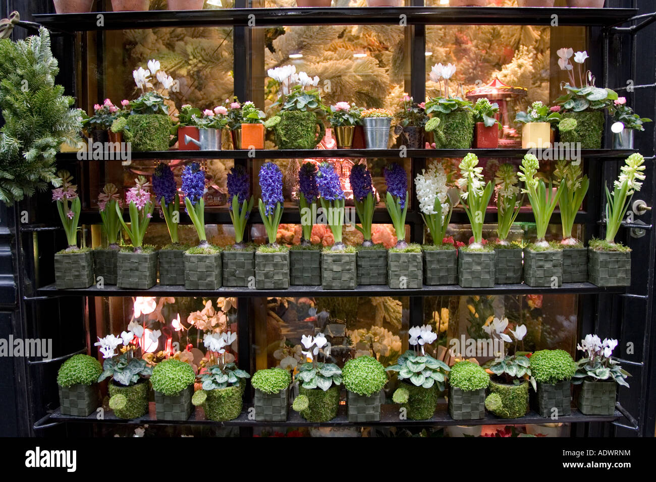 Florist Shop Window Display Near Boulevard Saint Germain Paris