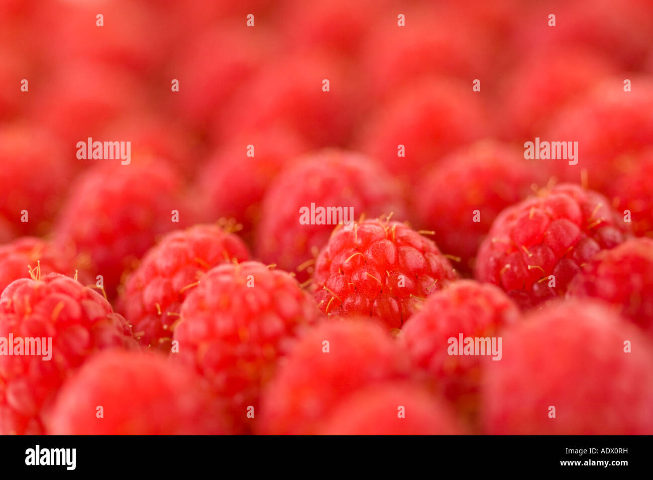 Raspeberries displayed for sale - Stock Image