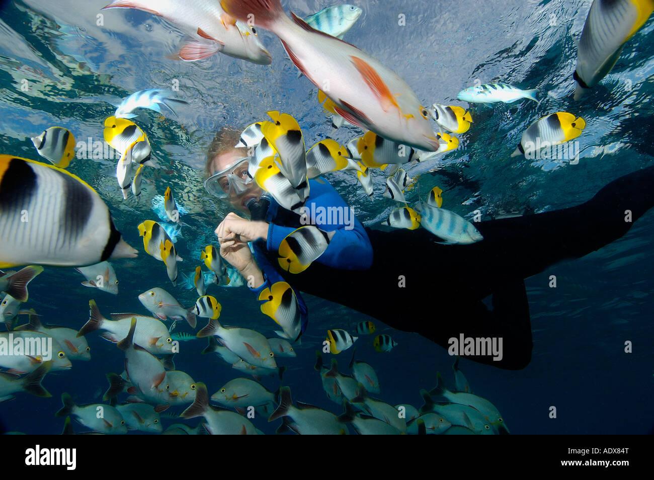 Snorkeling with Fishes Rangiroa Tuamotu Islands French Polynesia - Stock Image