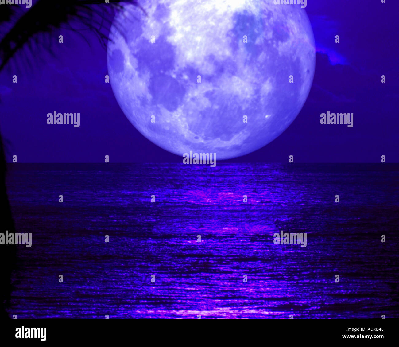 Concepts landscape night moonshine bluish moonlight full horizon beach palm reflection romantic vacations blue round astronomy m - Stock Image