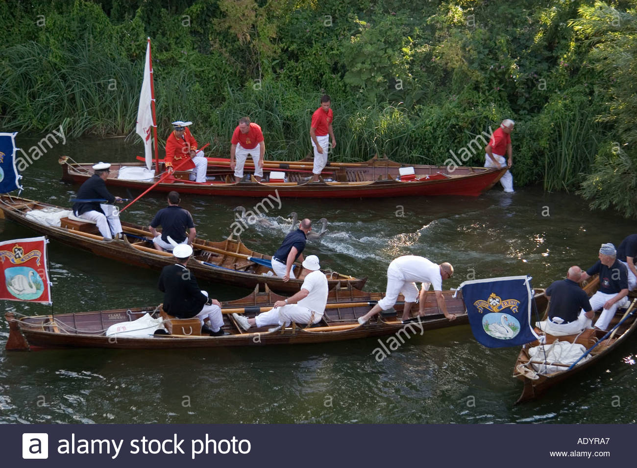 Annual Swan Upping event on the River Thames near Goring, UK - Stock Image