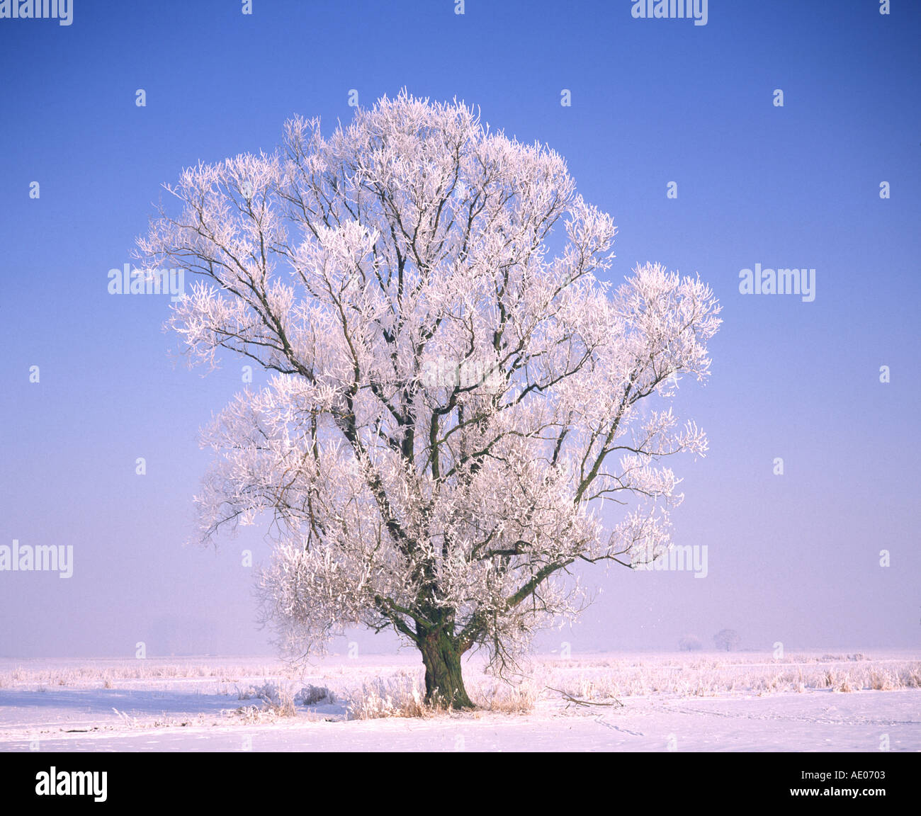 Eiskristalle auf Laubbaum crystals of ice on a broad leaved tree - Stock Image