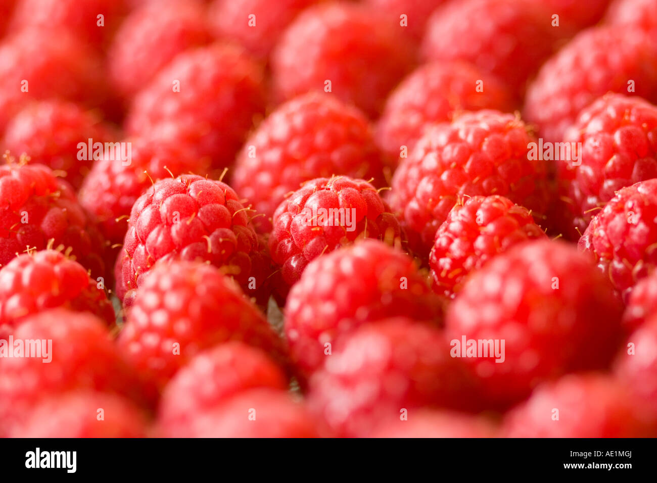 Raspeberries displayed for sale - Stock Image