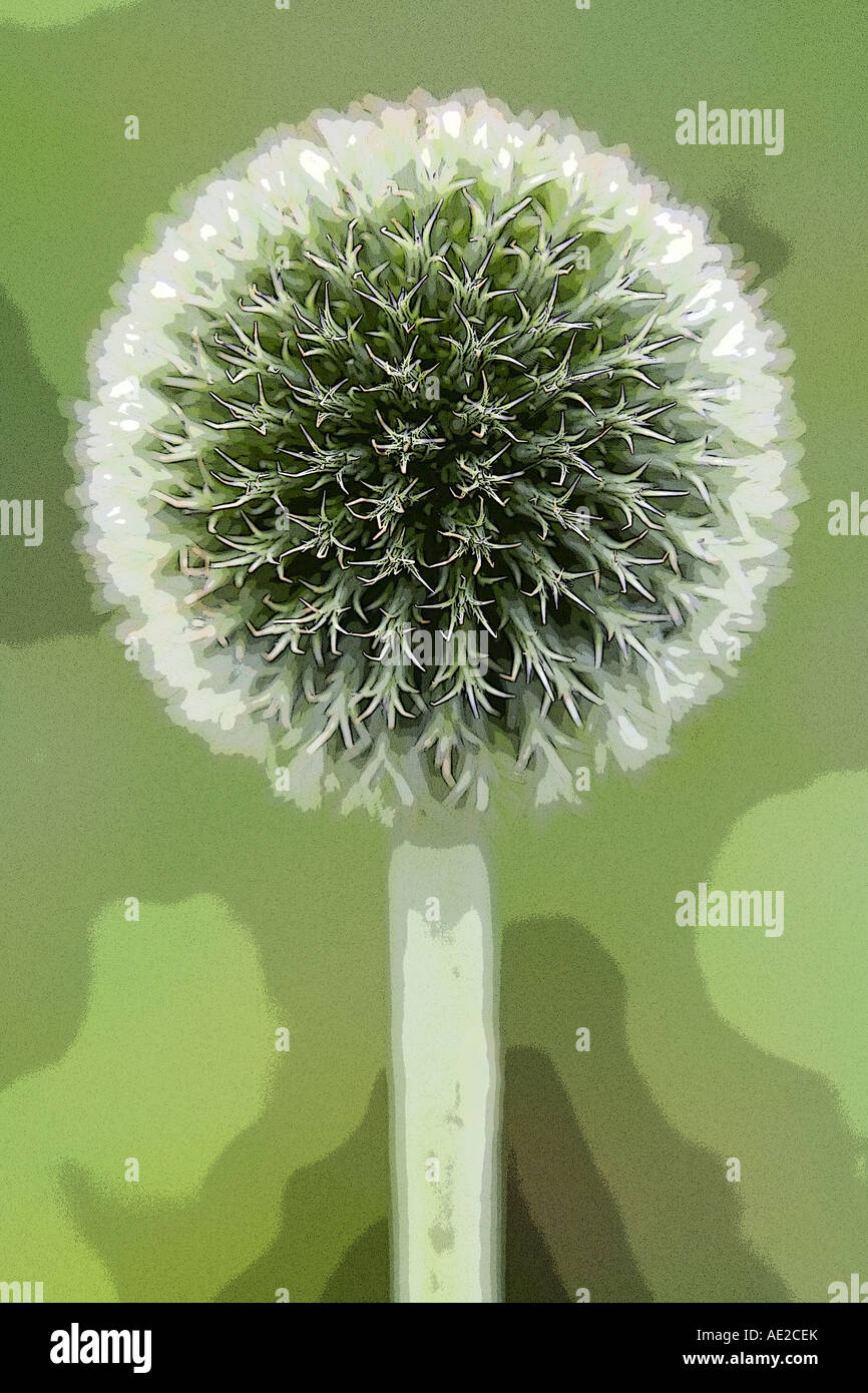 Green echinops pop art - Stock Image