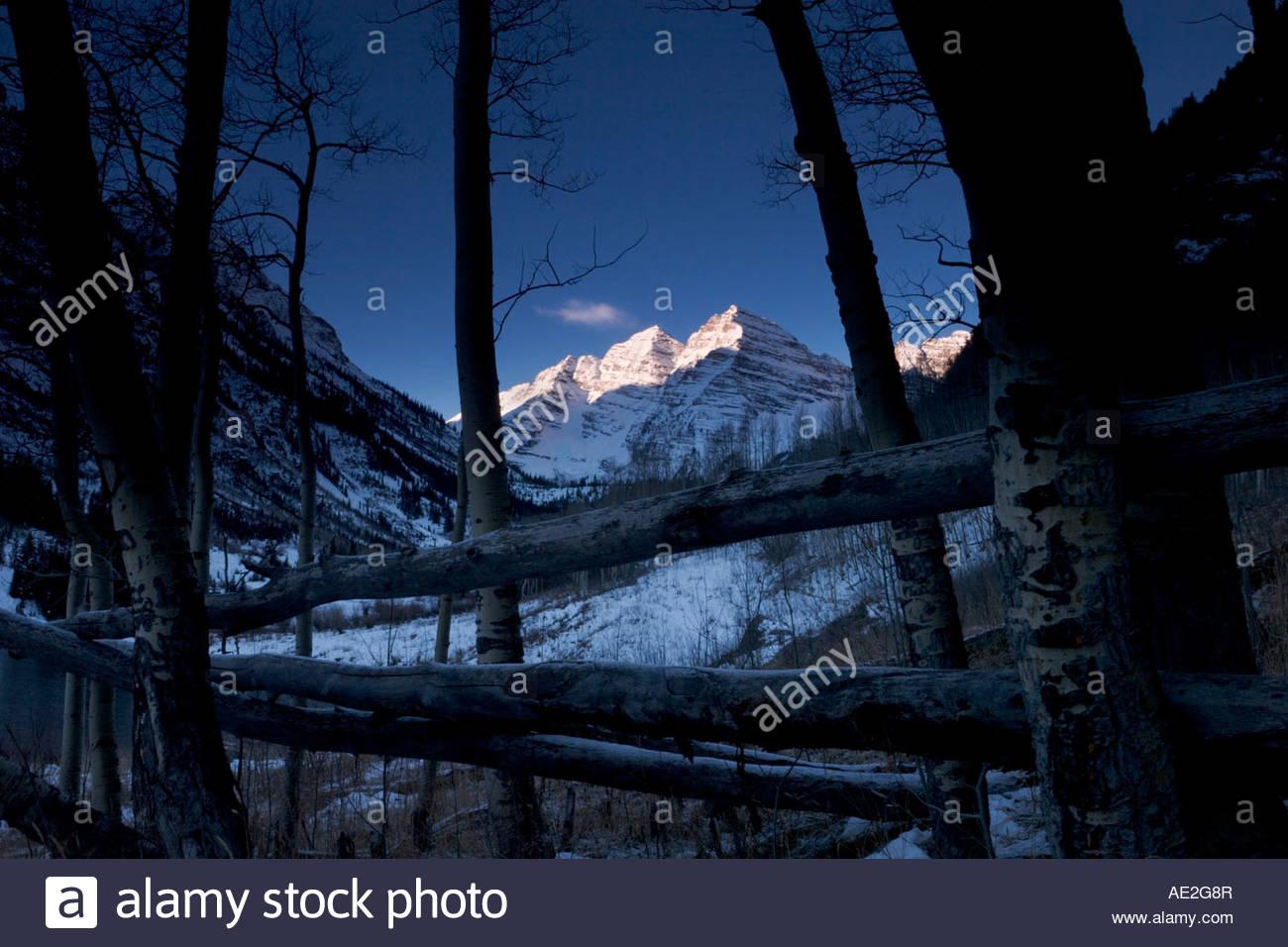 Elk Aspen Snowmass Stock Photos & Elk Aspen Snowmass Stock