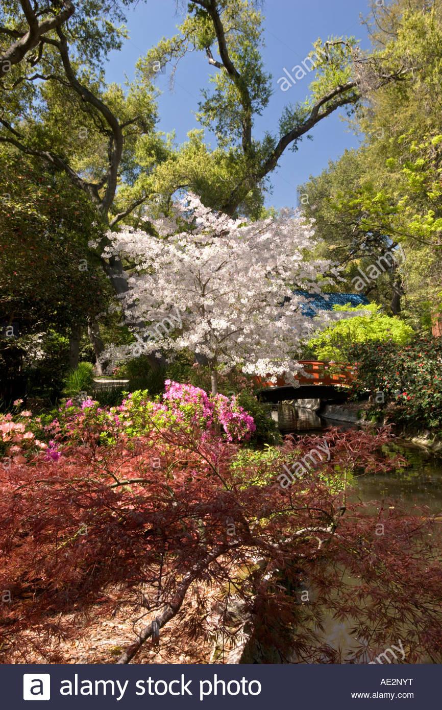 Japanese Garden Spring Bloom at Descanso Gardens La Canada ...