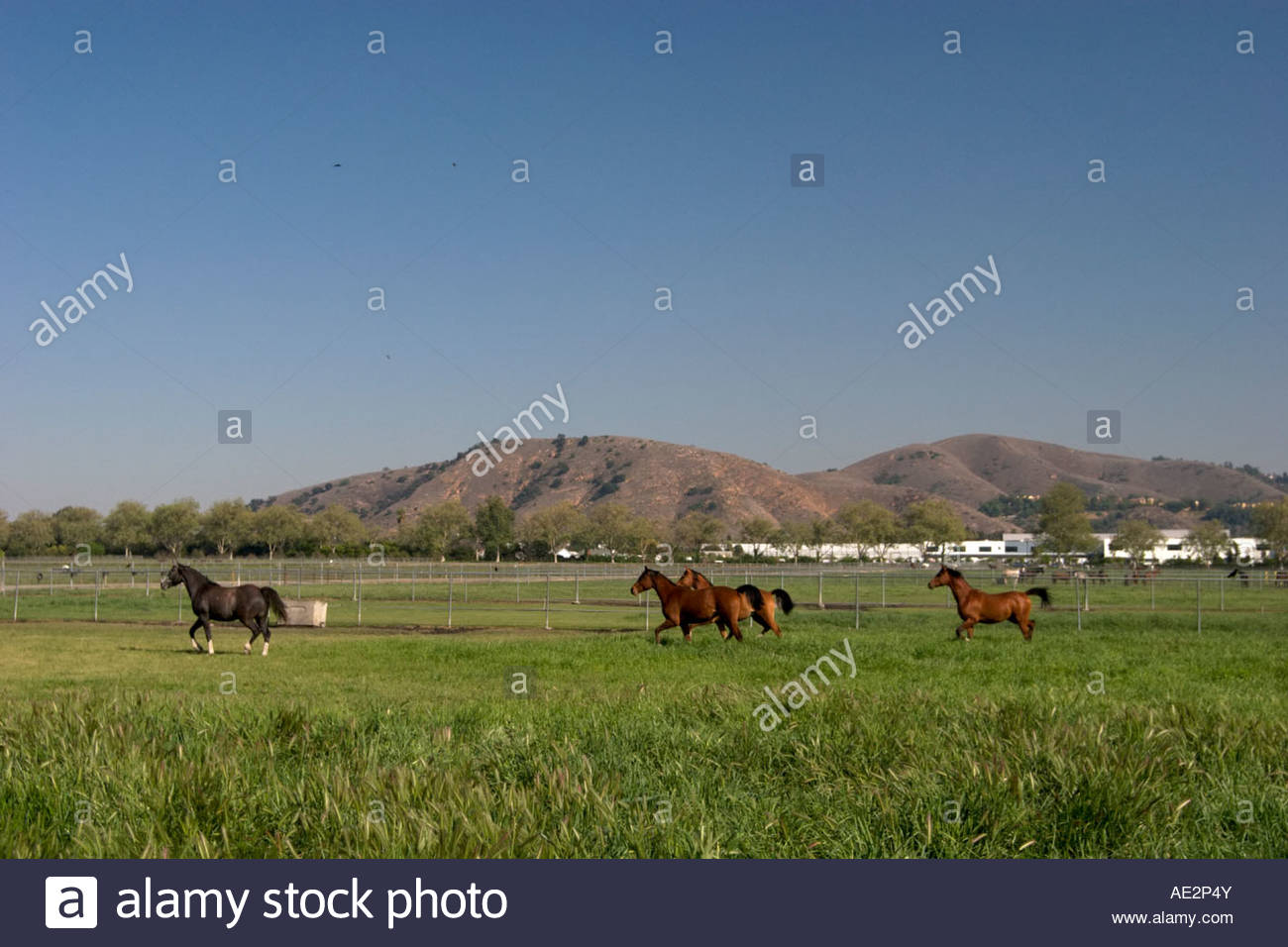 Poly Stock Photos & Poly Stock Images - Alamy