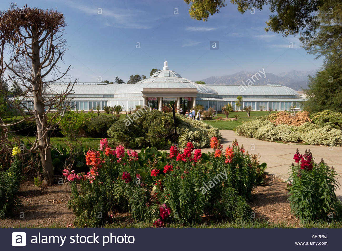 Conservatory At Huntington Botanical Gardens California Stock