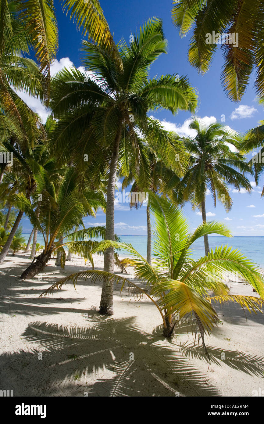 Palm Trees On A Deserted Island In Aitutaki Lagoon In The Cook Stock