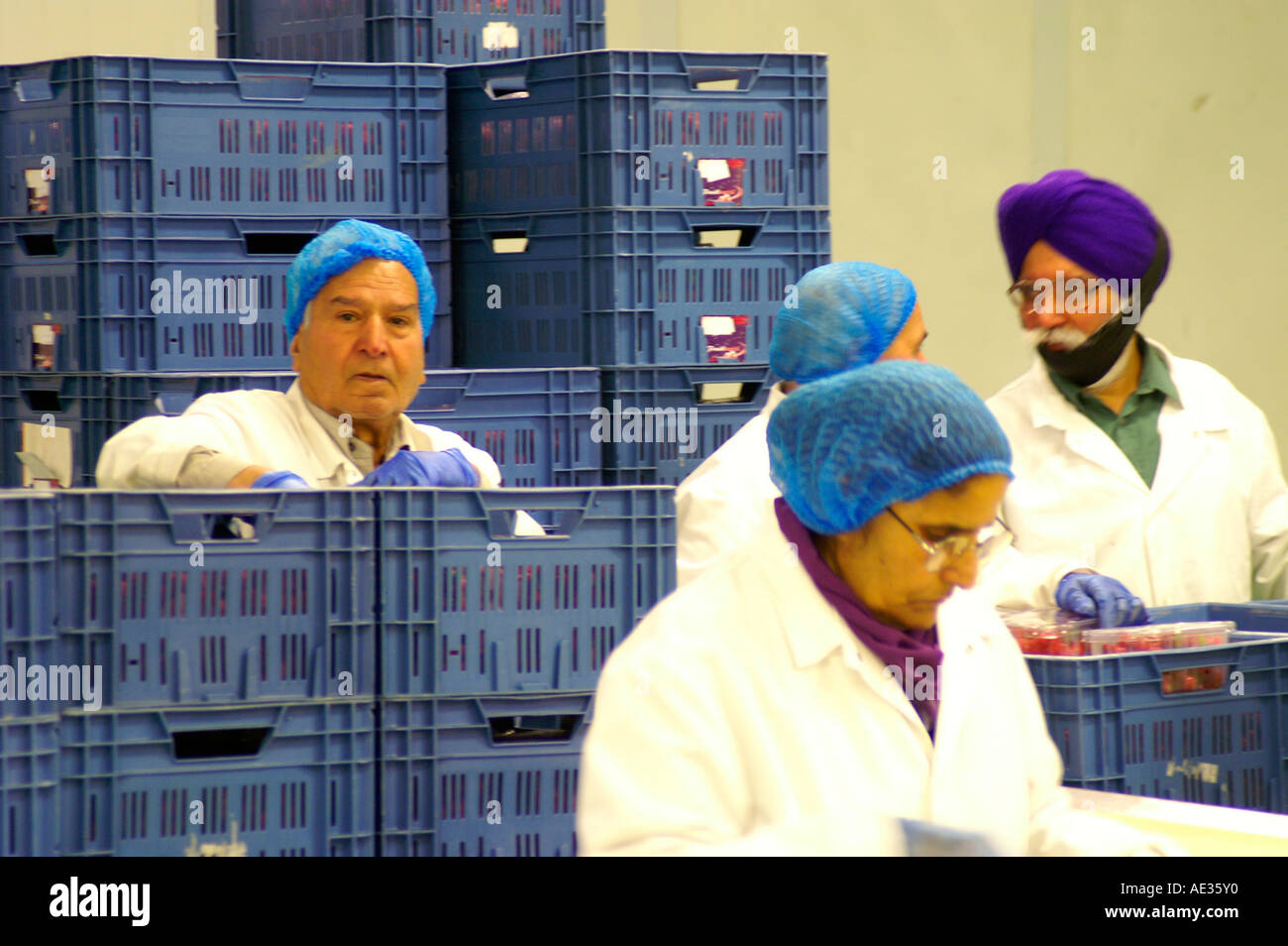 Desperate migrant workers in packhouse, doing menial work, England - Stock Image