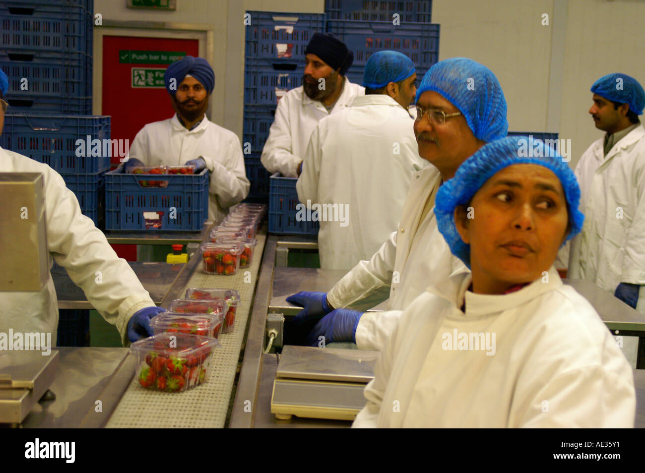 Desperate workers in packhouse, England - Stock Image