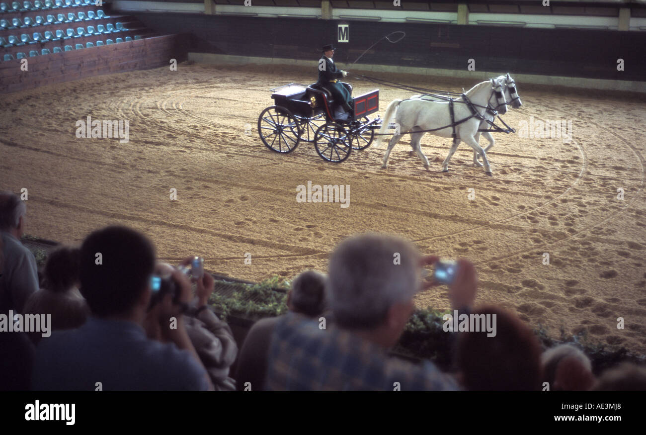 Lipizzaner horses being used in carriage riding display as part of dressage show at the Lipica Stud farm Slovenia - Stock Image